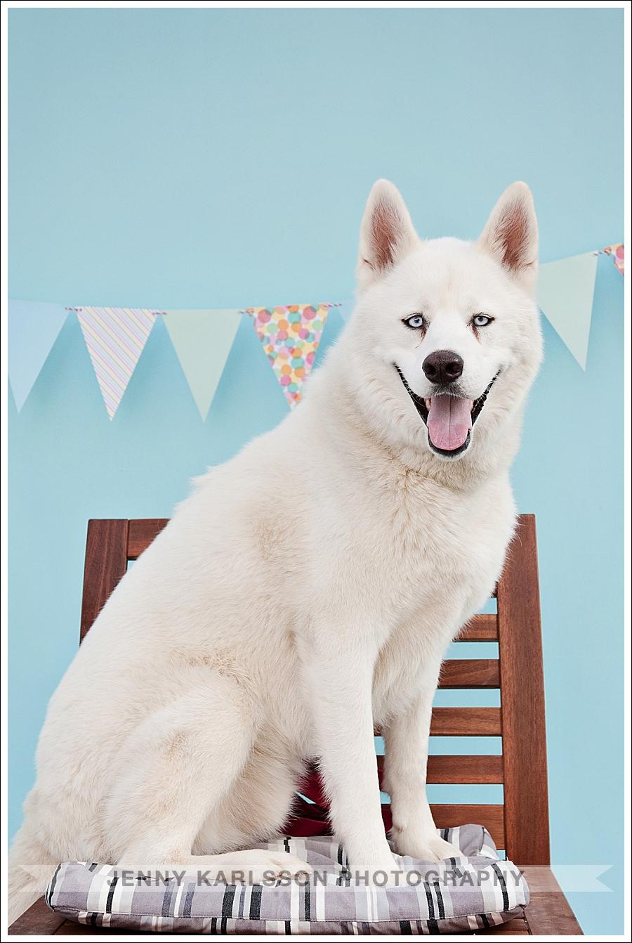 Petagogy Anniversary | Pittsburgh Pet Photography