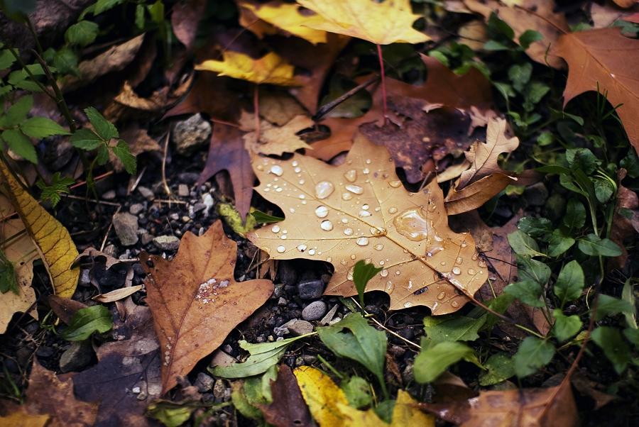 Jenny Karlsson Photography | Still Life Collection Leaf Color