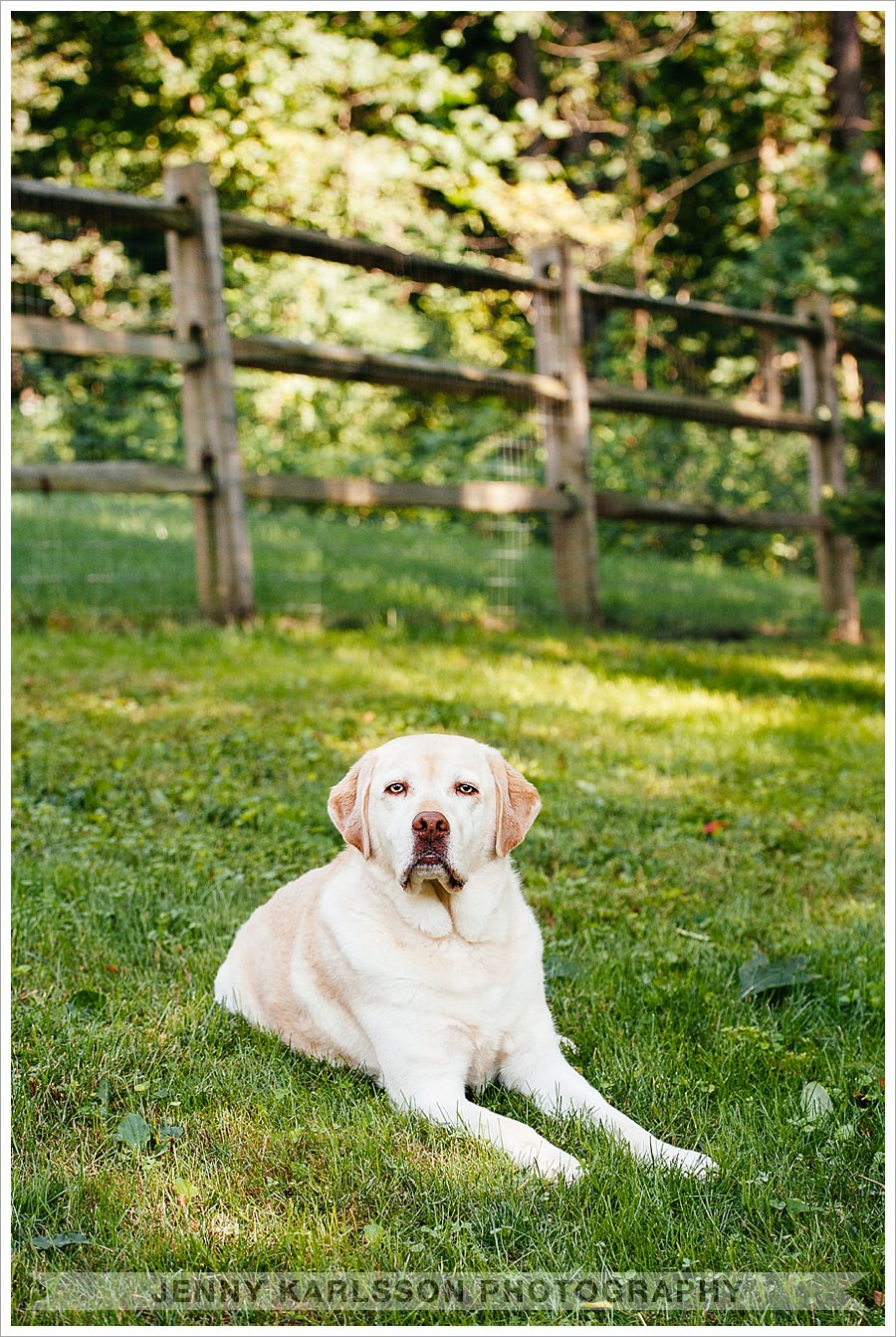 pet photography in Pittsburgh, PA