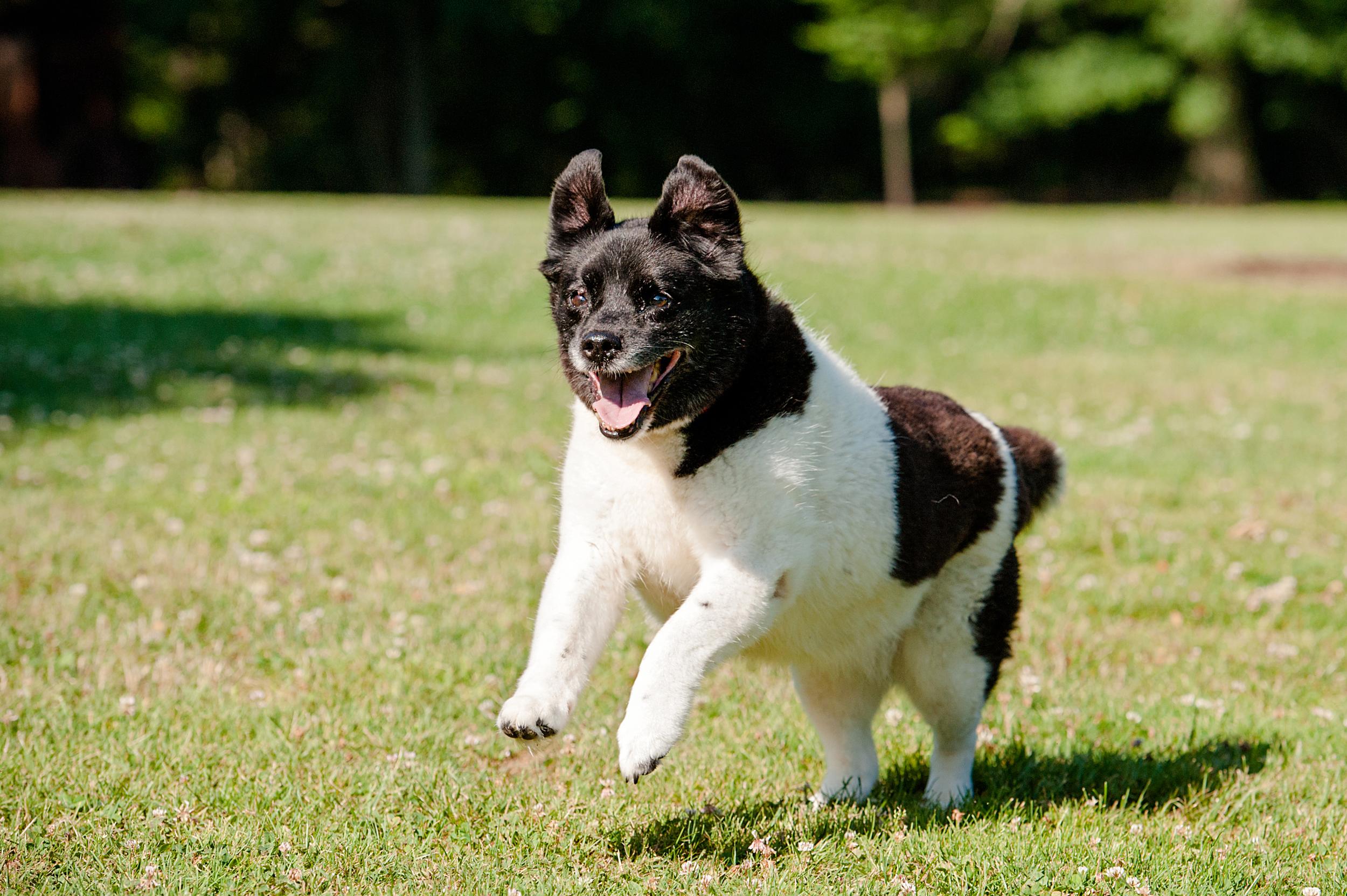 dog-photography-hartwood-acres-giftbug-07.jpg