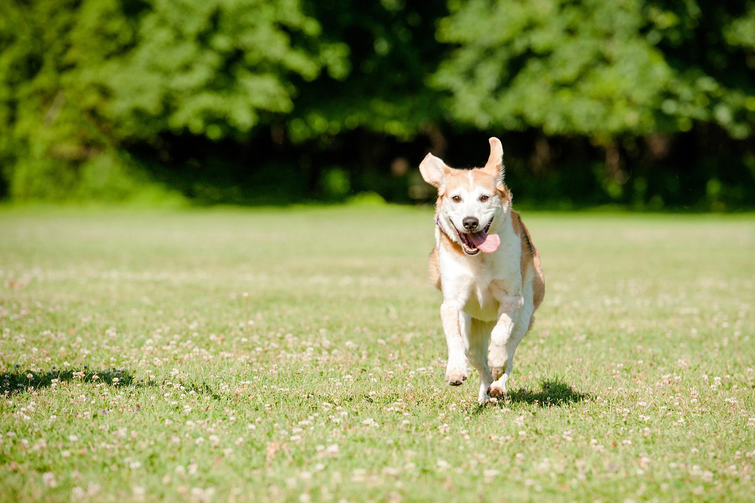 dog-photography-hartwood-acres-giftbug-06.jpg