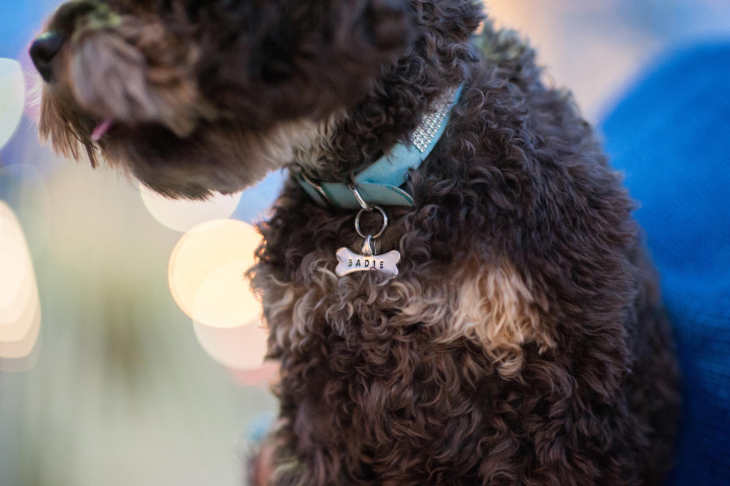 pittsburgh-pet-photographer-sadie-15.jpg