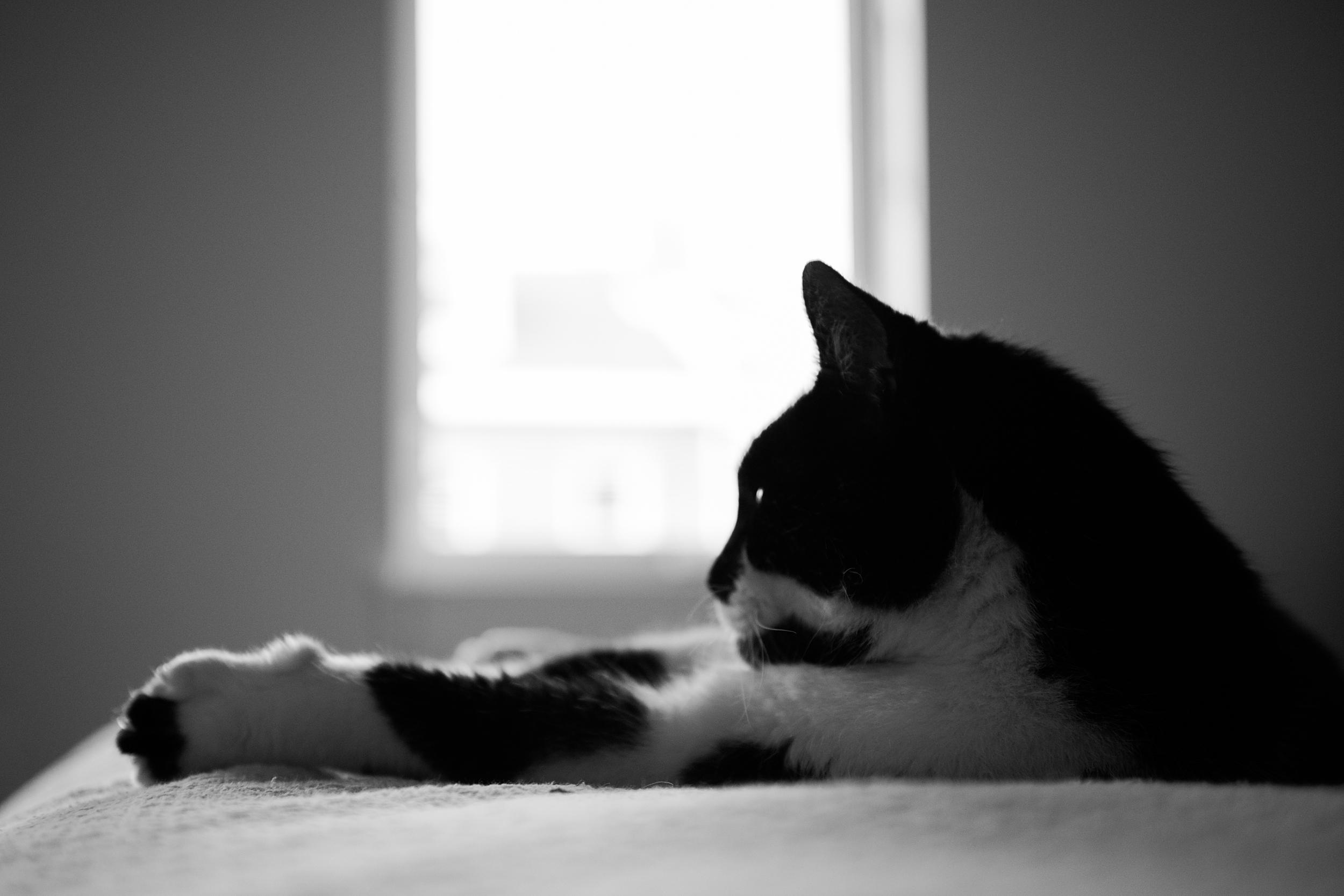cat-photography-pittsburgh-raymond-07.jpg