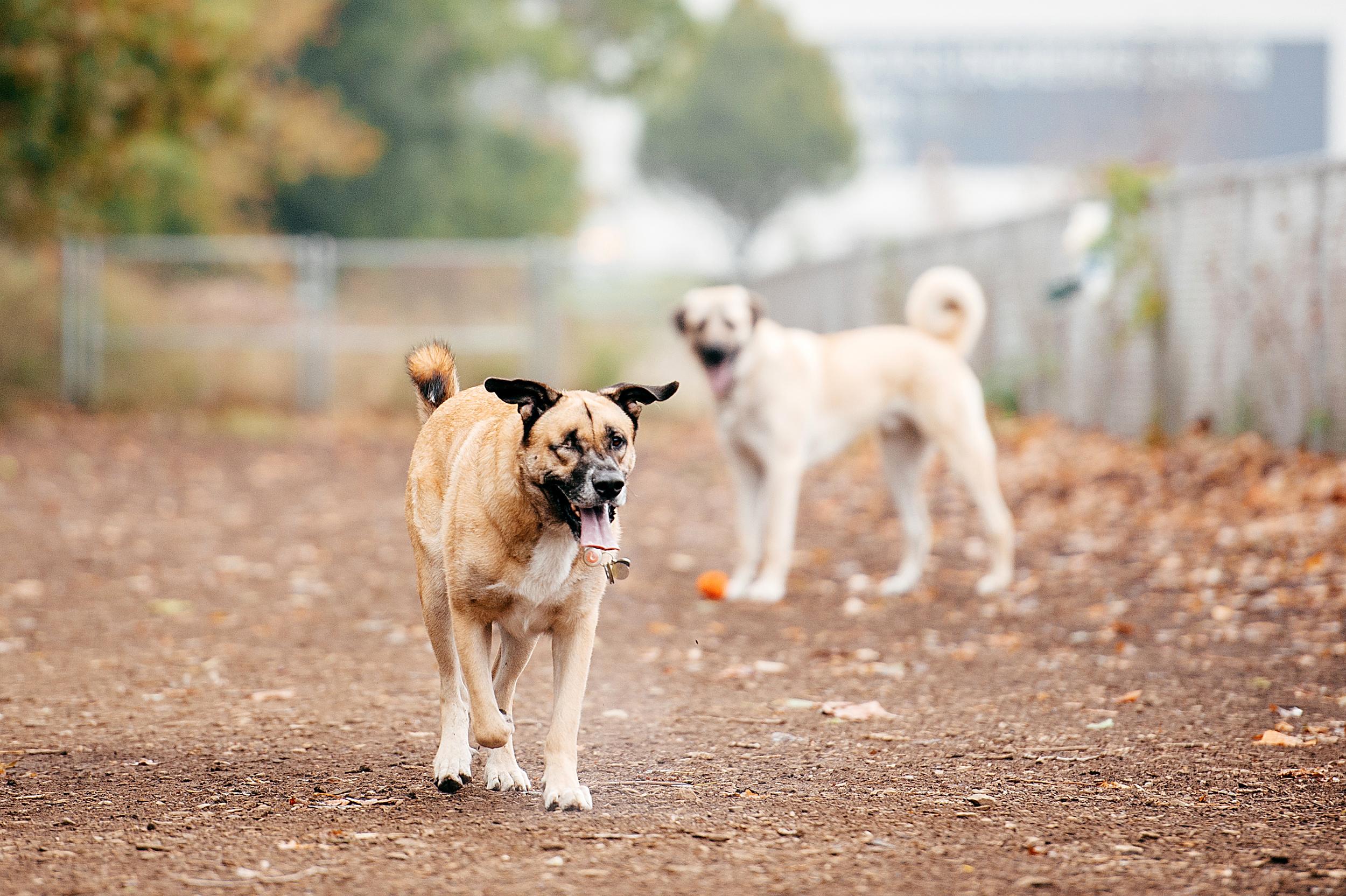 bernard-dog-run-pittsburgh-walsh01.jpg