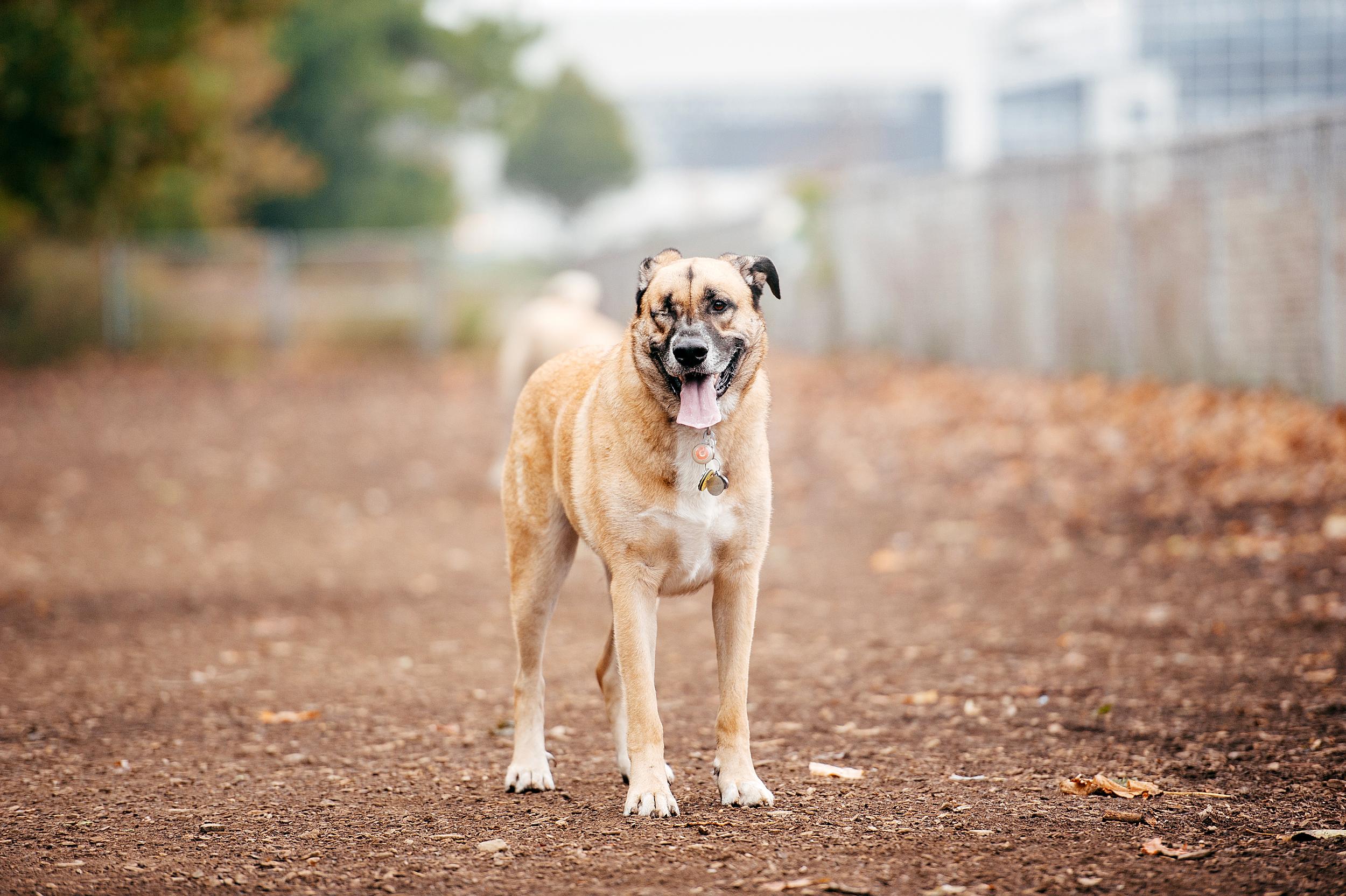 bernard-dog-run-pittsburgh-walsh02.jpg
