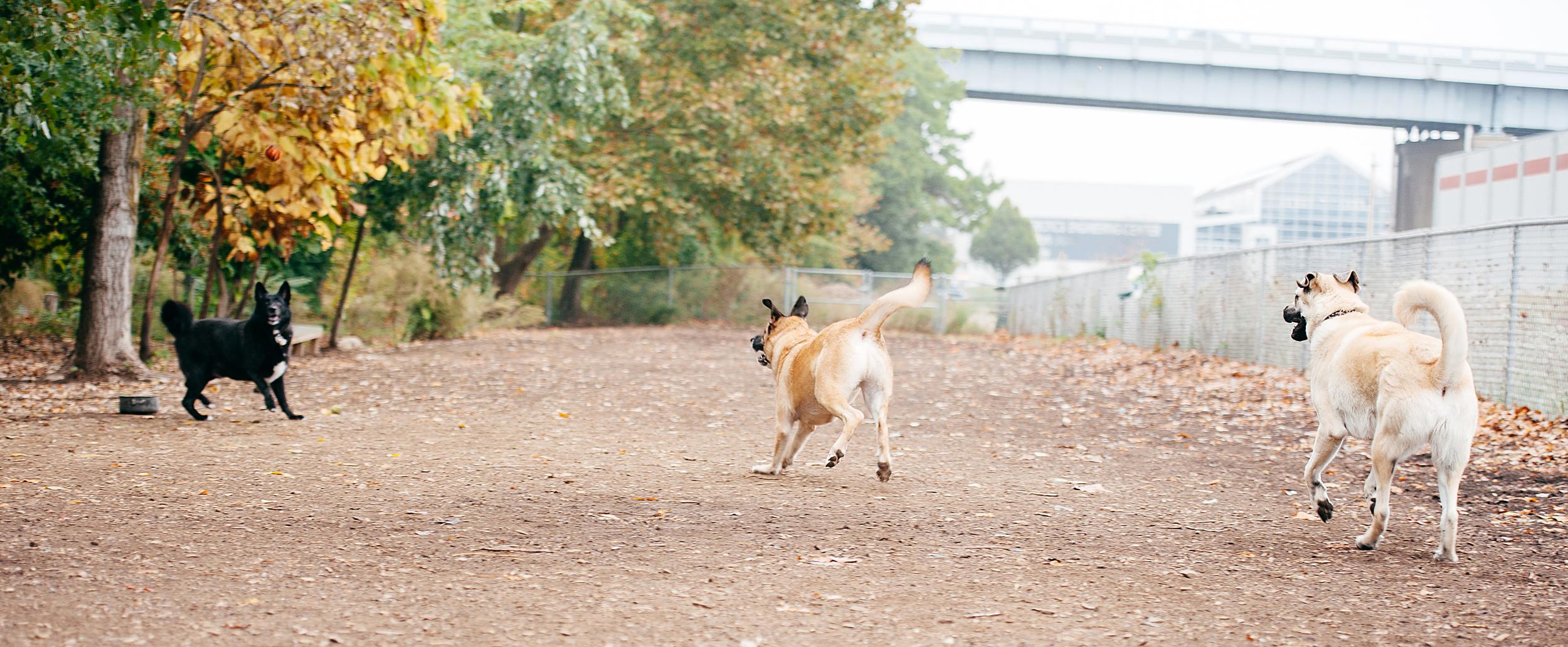 bernard-dog-run-pittsburgh-walsh03.jpg