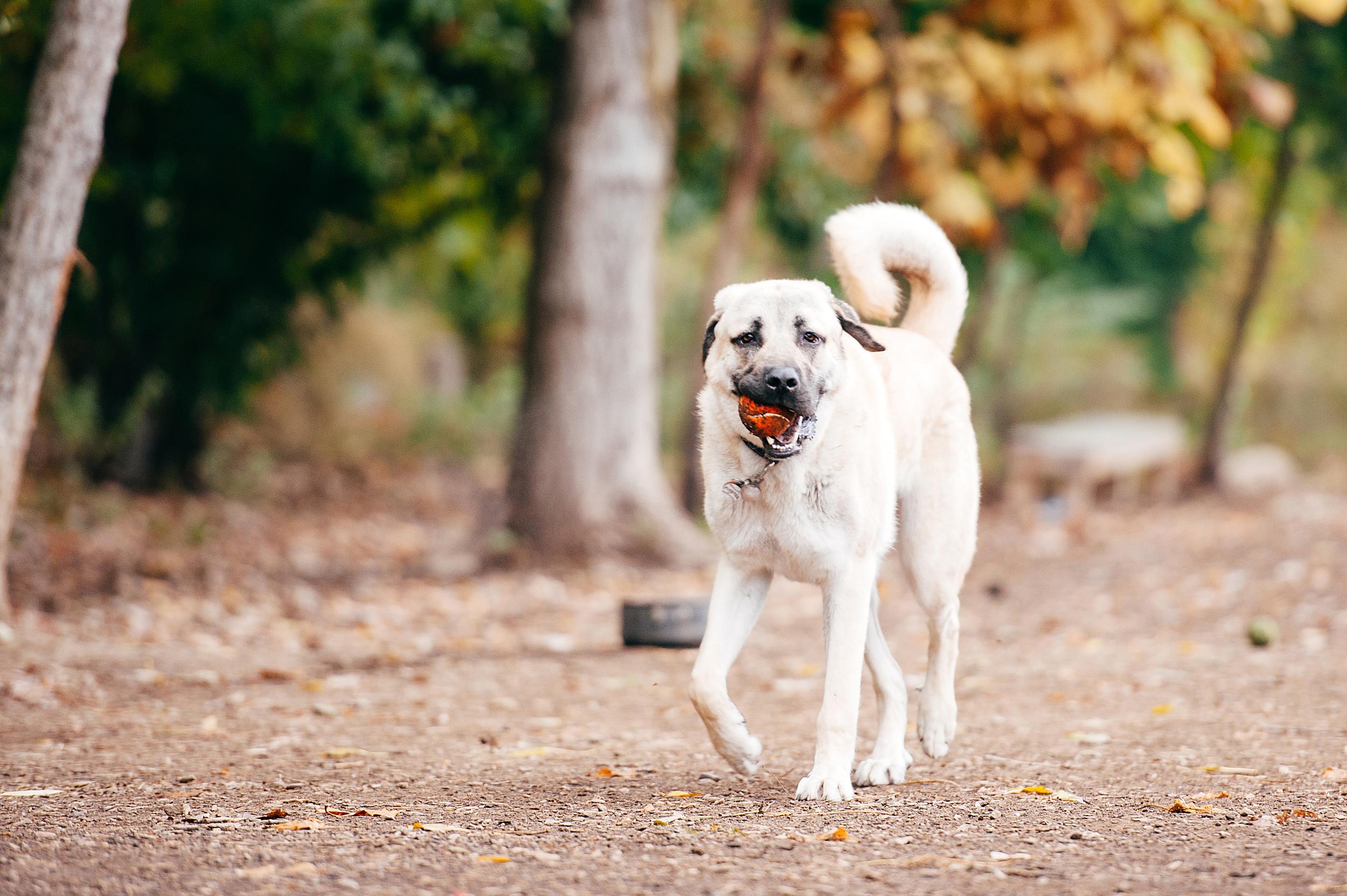 bernard-dog-run-pittsburgh-walsh05.jpg