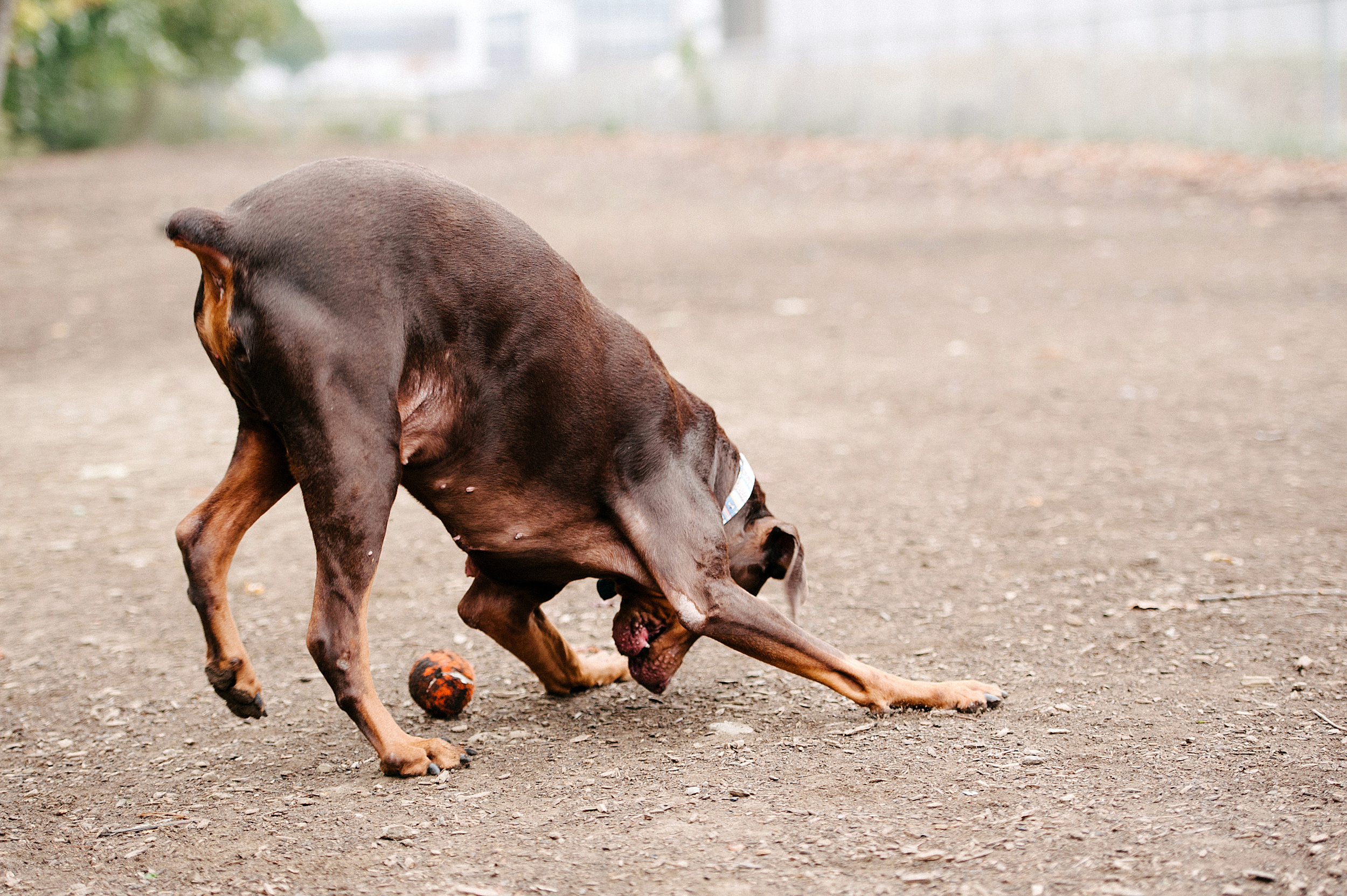 bernard-dog-run-pittsburgh-walsh07.jpg