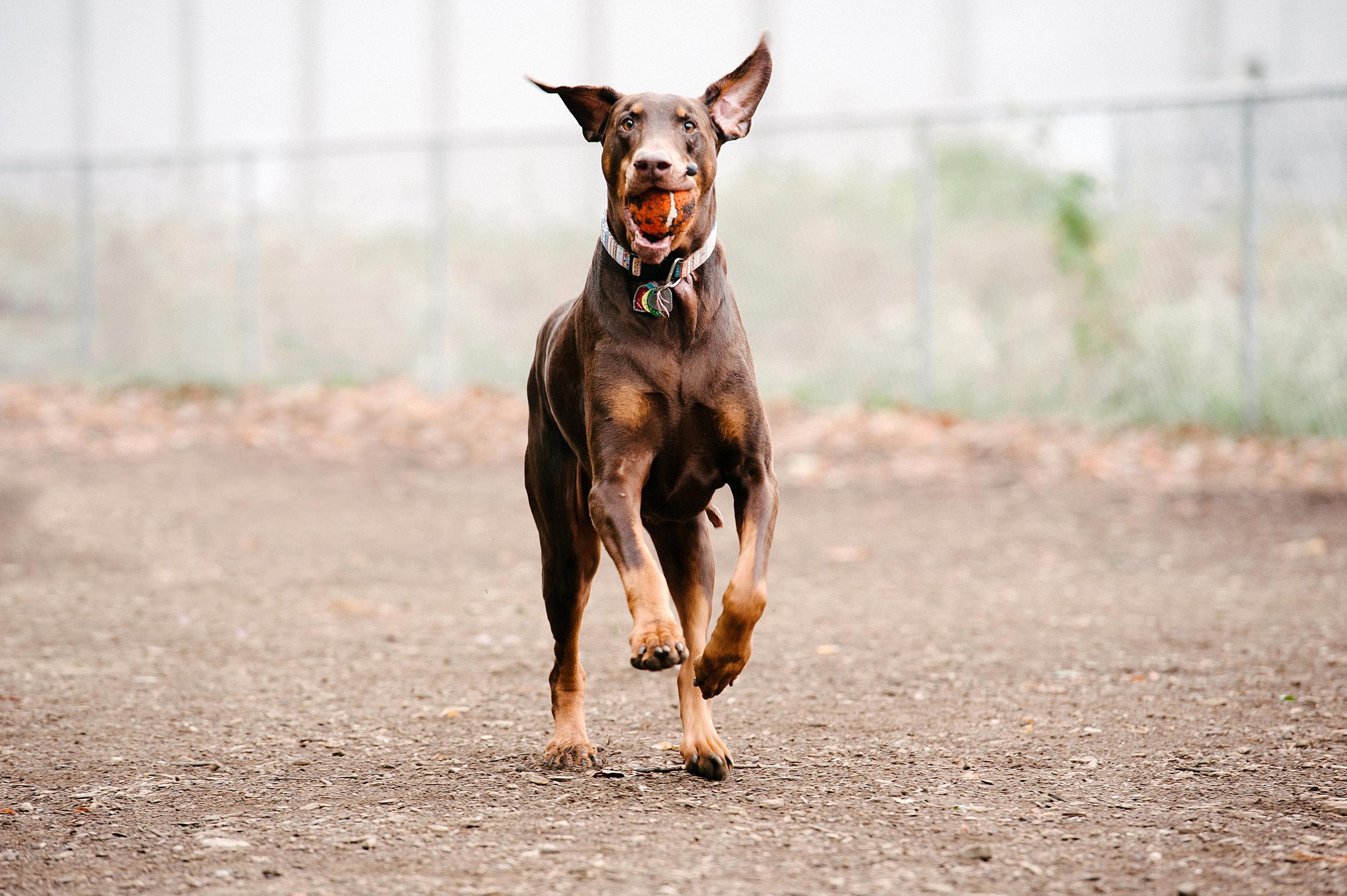 bernard-dog-run-pittsburgh-walsh08.jpg