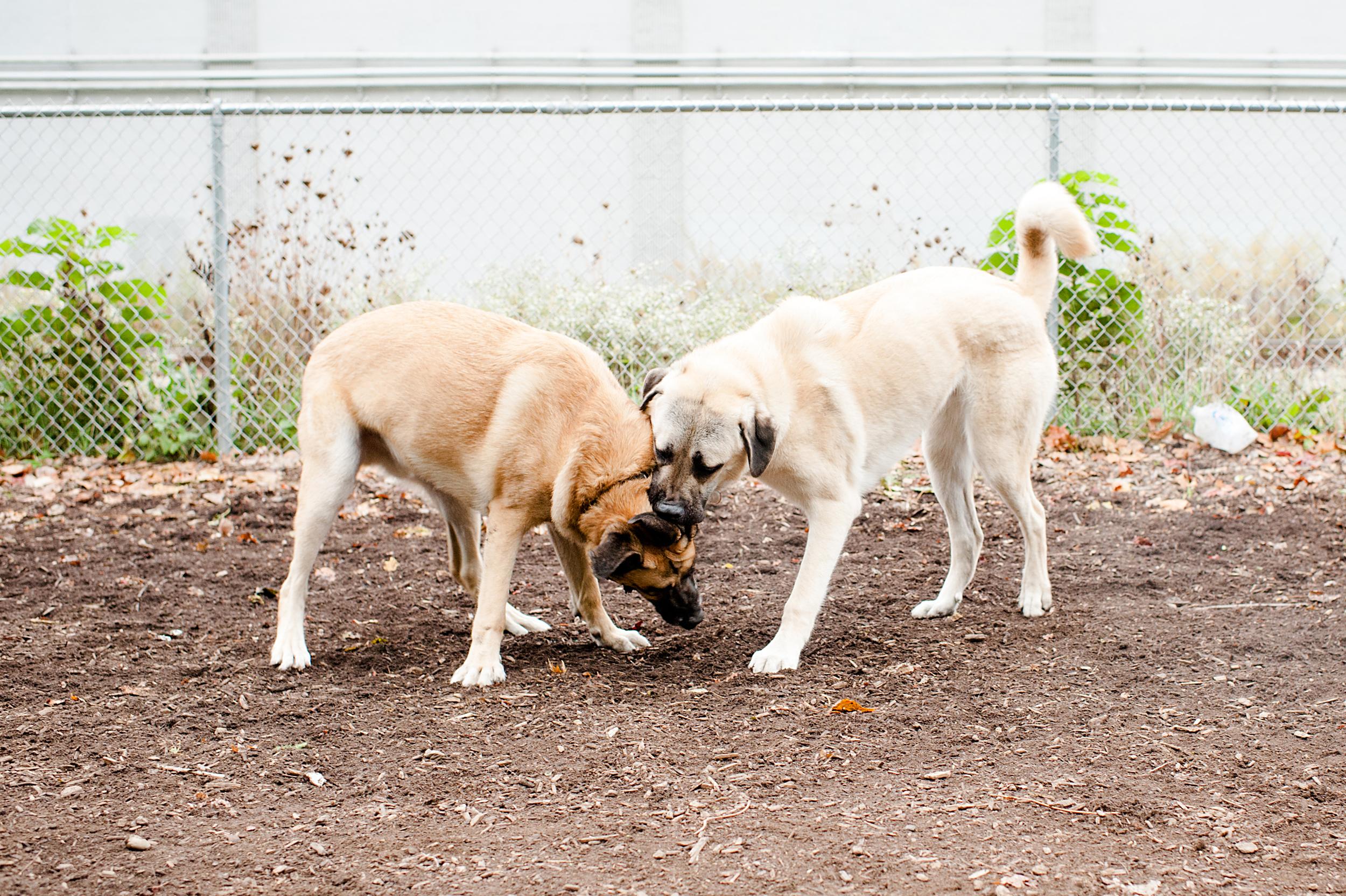 bernard-dog-run-pittsburgh-walsh11.jpg
