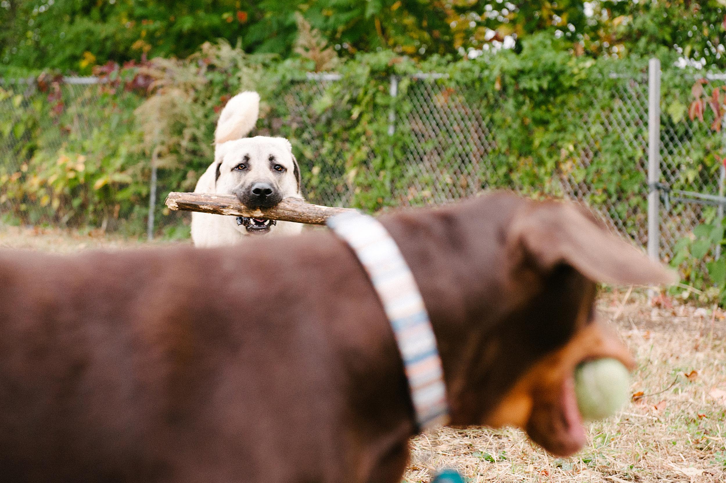 bernard-dog-run-pittsburgh-walsh17.jpg
