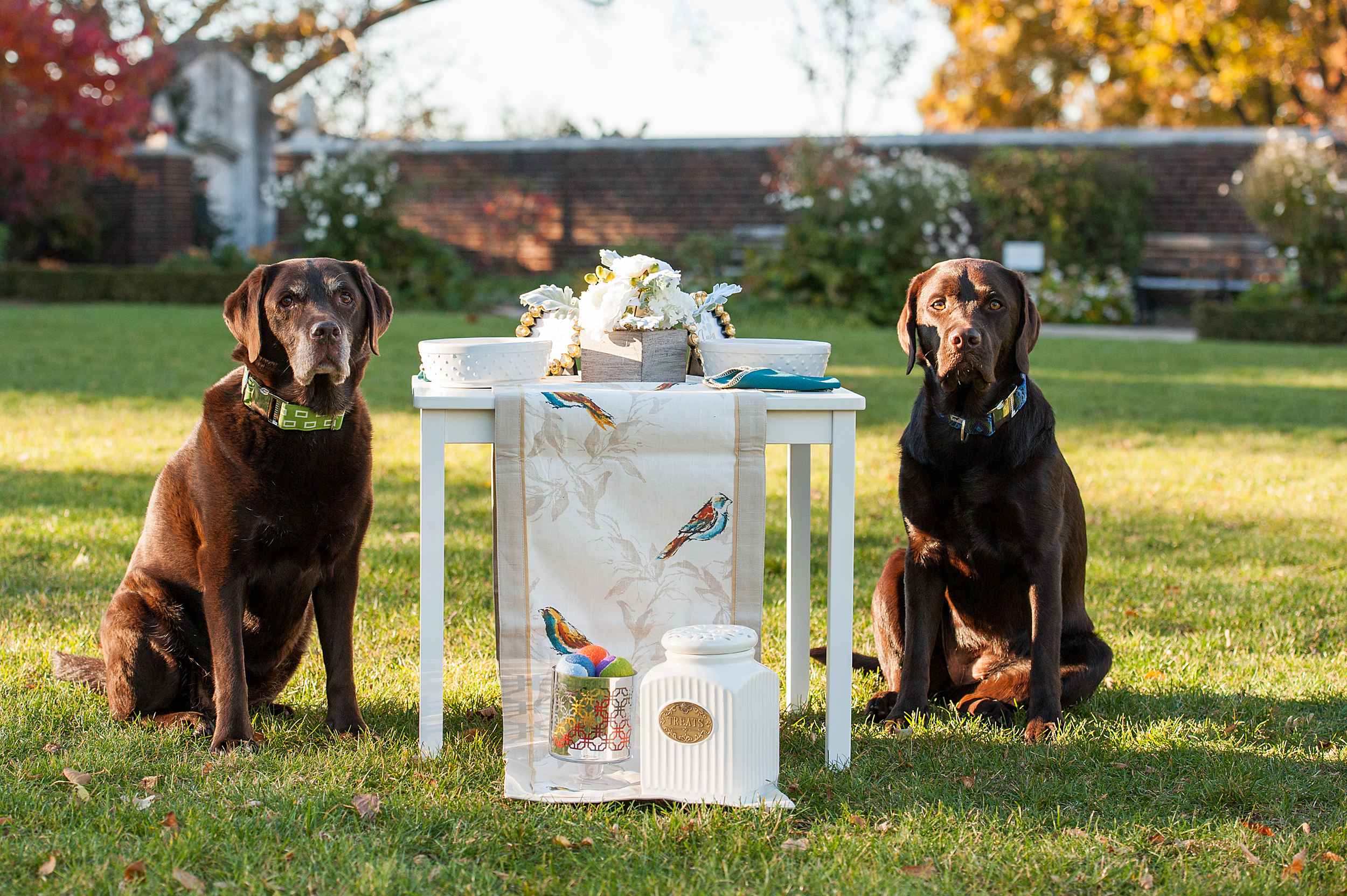 dog-birthday-party-jenny-karlsson-007.jpg