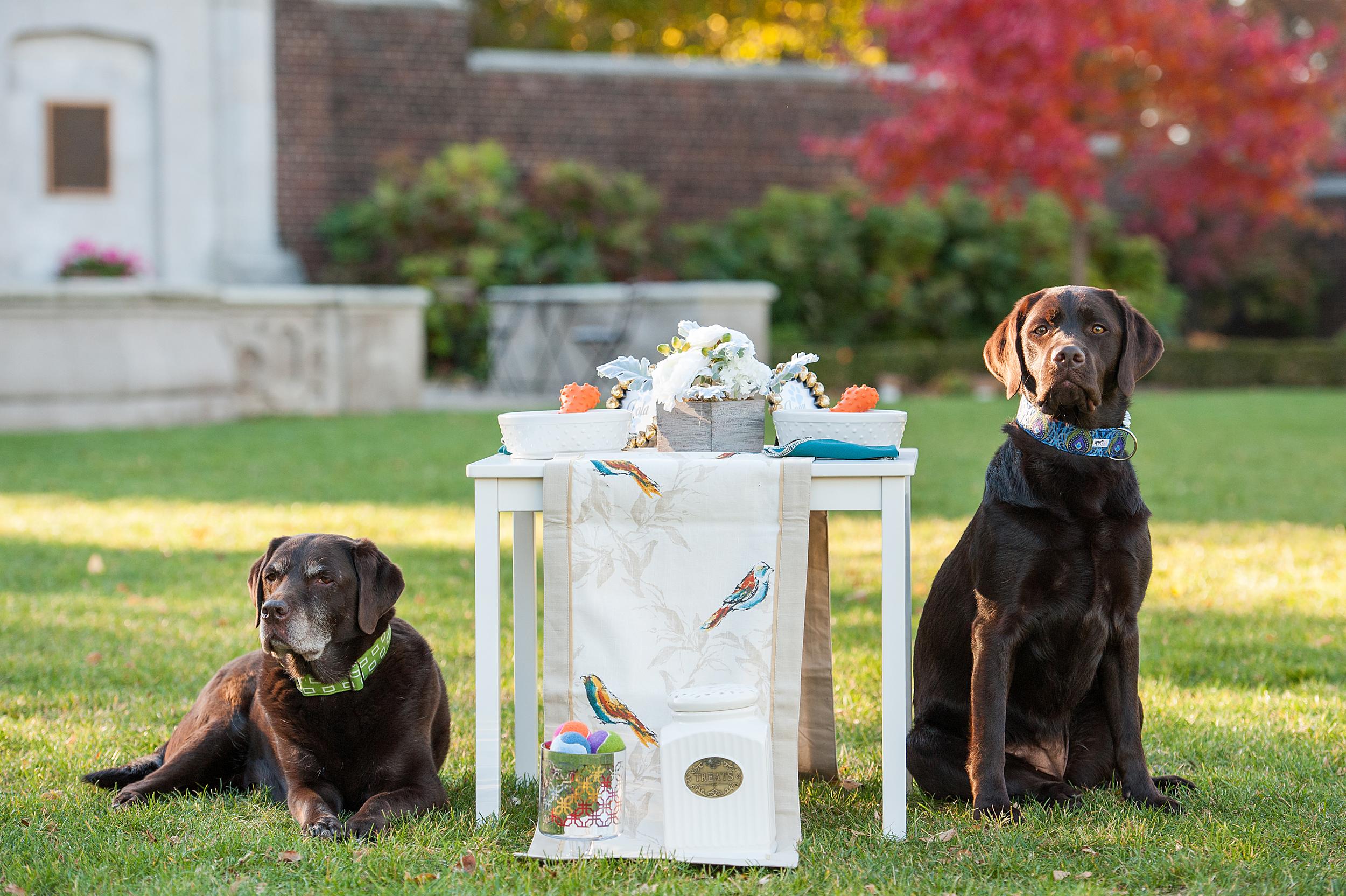 dog-birthday-party-jenny-karlsson-008.jpg
