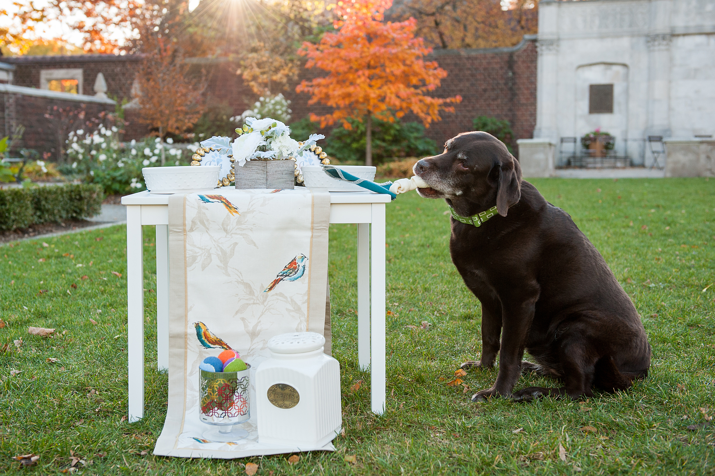 dog-birthday-party-jenny-karlsson-010.jpg