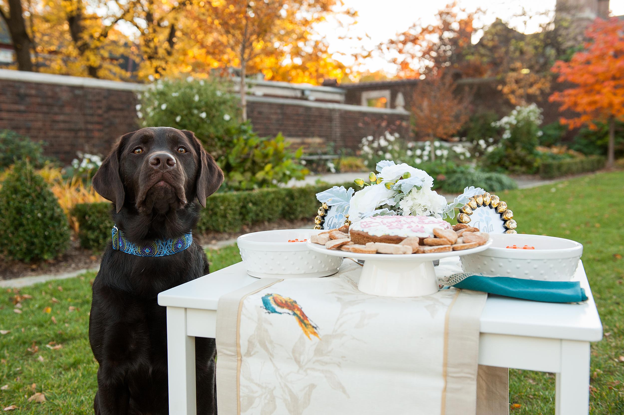 dog-birthday-party-jenny-karlsson-012.jpg