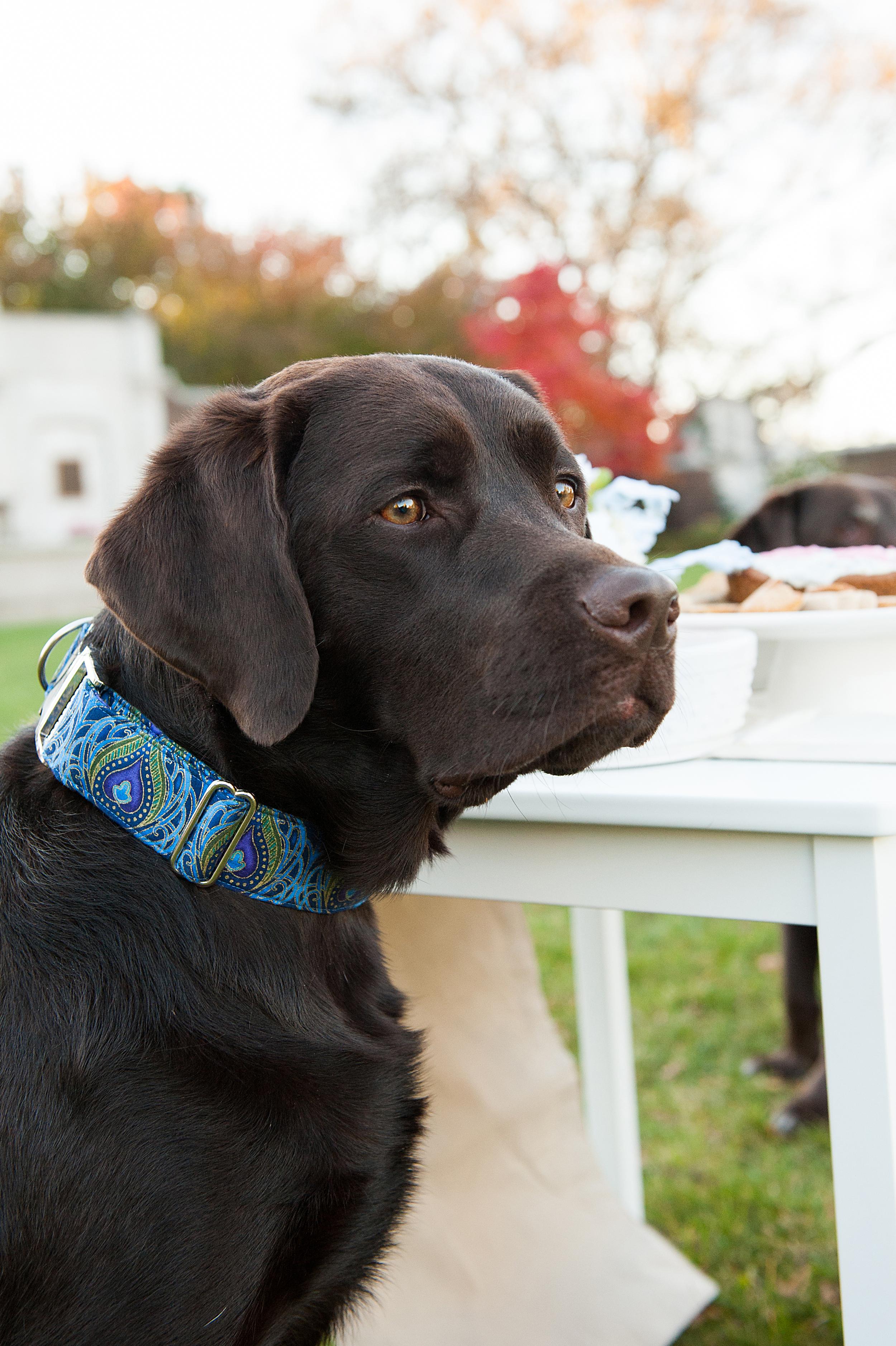dog-birthday-party-jenny-karlsson-014.jpg