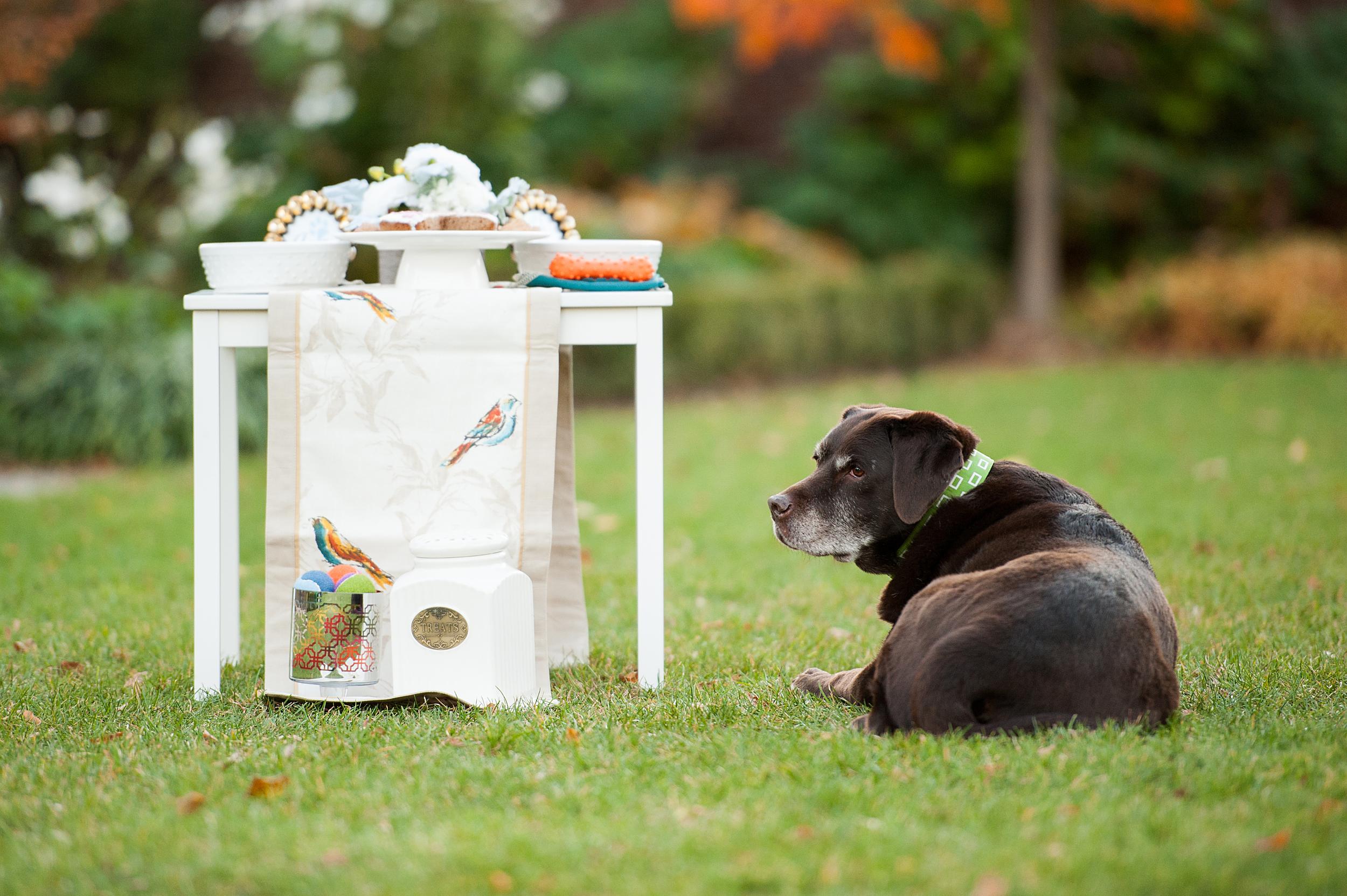 dog-birthday-party-jenny-karlsson-025.jpg