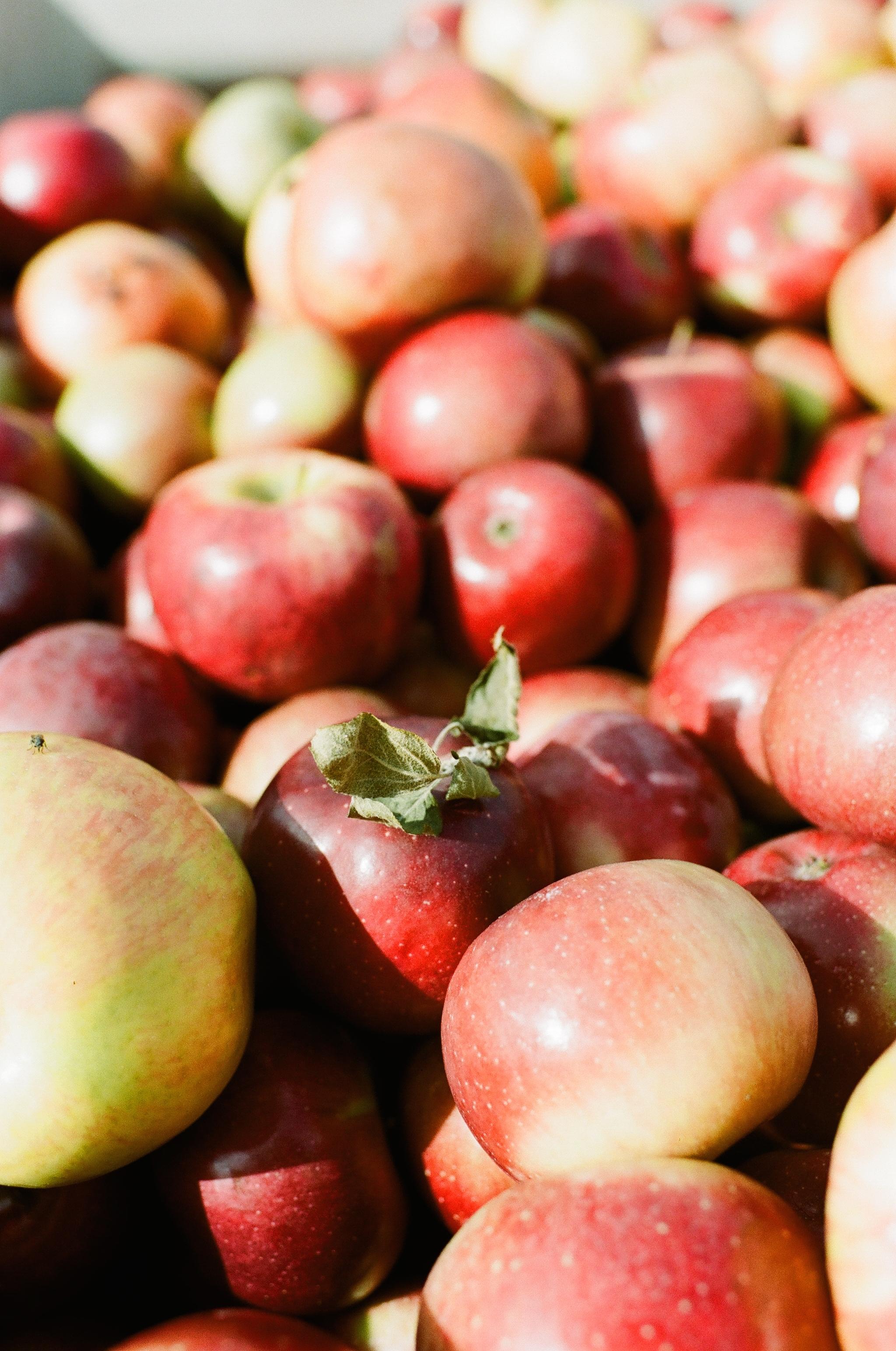 soergel-orchards-pittsburgh-012.jpg