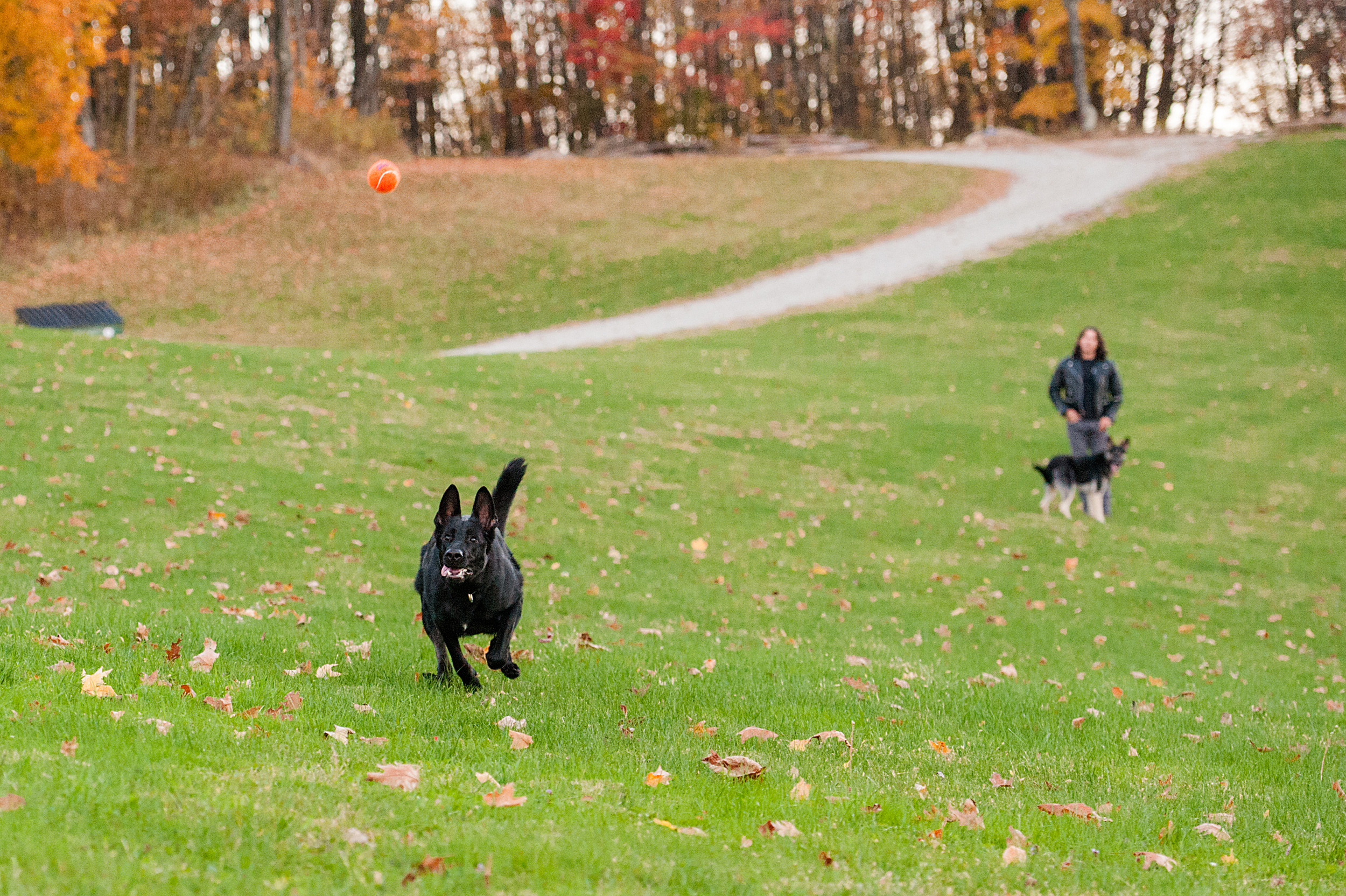 fall-family-photos-with-pets-036.jpg