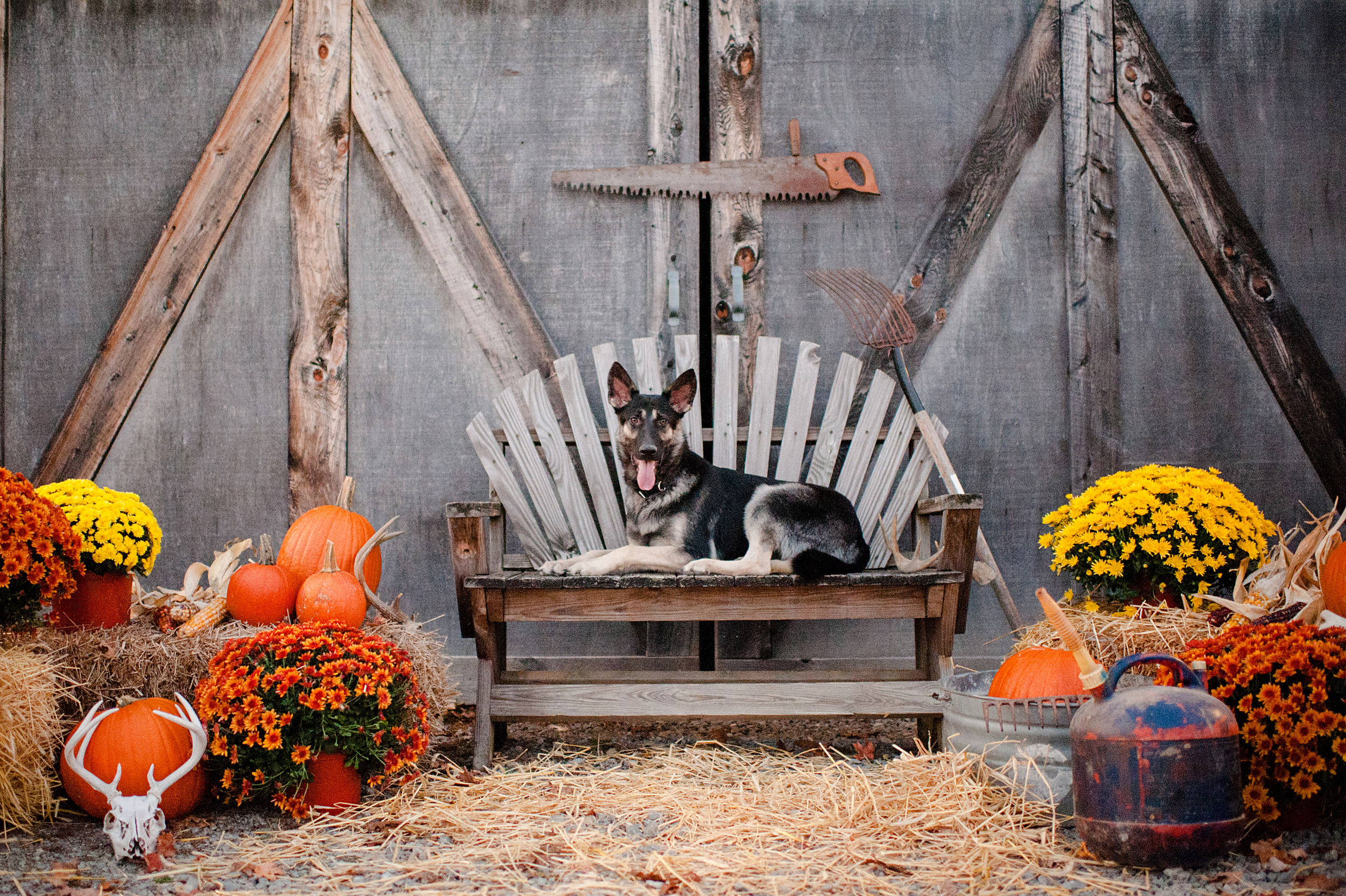 fall-family-photos-with-pets-046.jpg