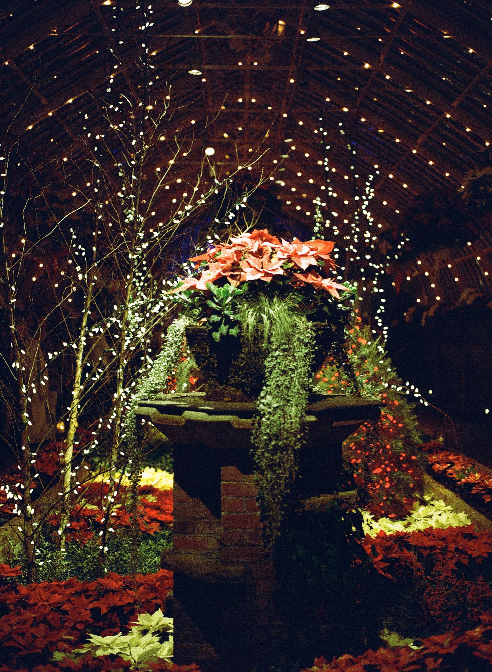 Phipps Conservatory Pittsburgh Winter Flower Show 020.jpg