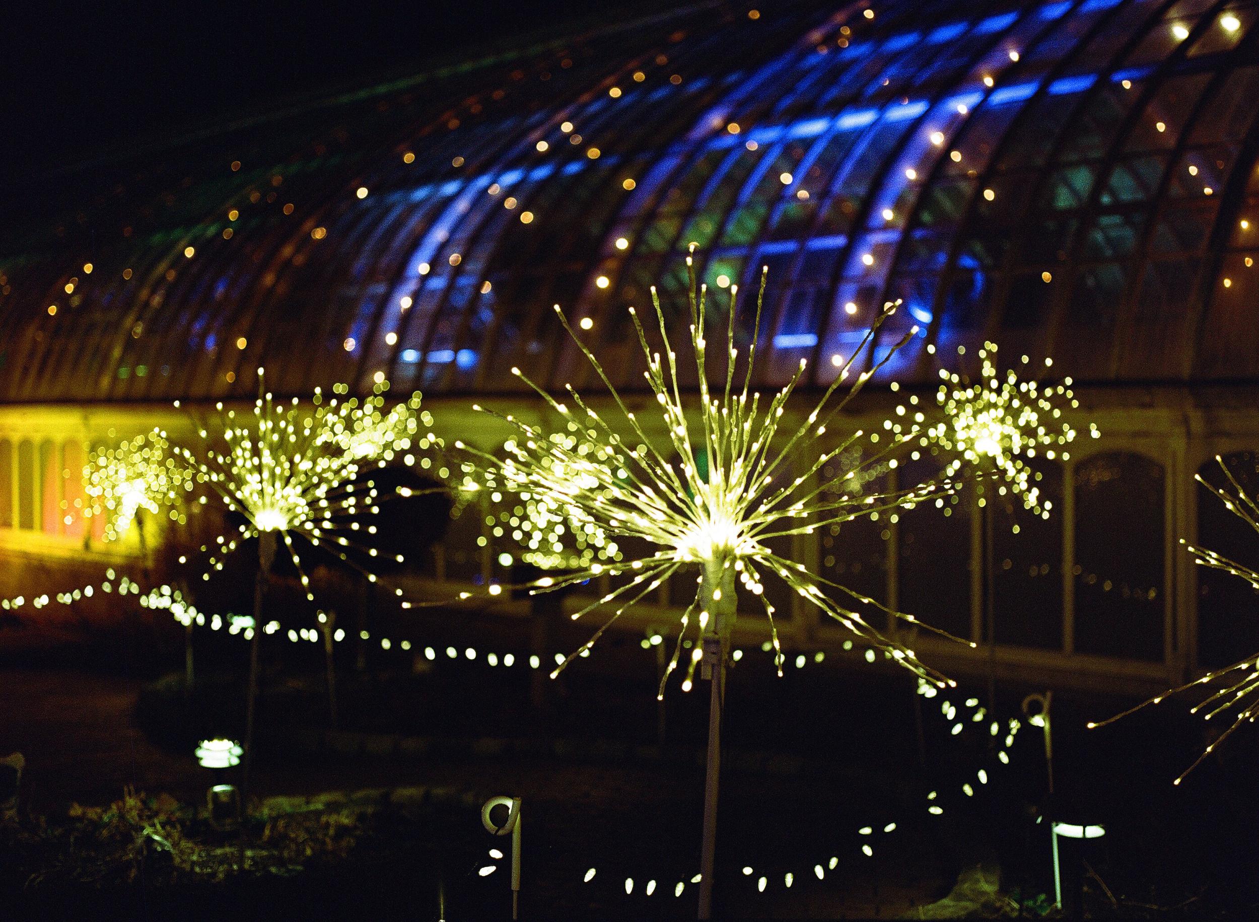Phipps Conservatory Pittsburgh Winter Flower Show 022.jpg