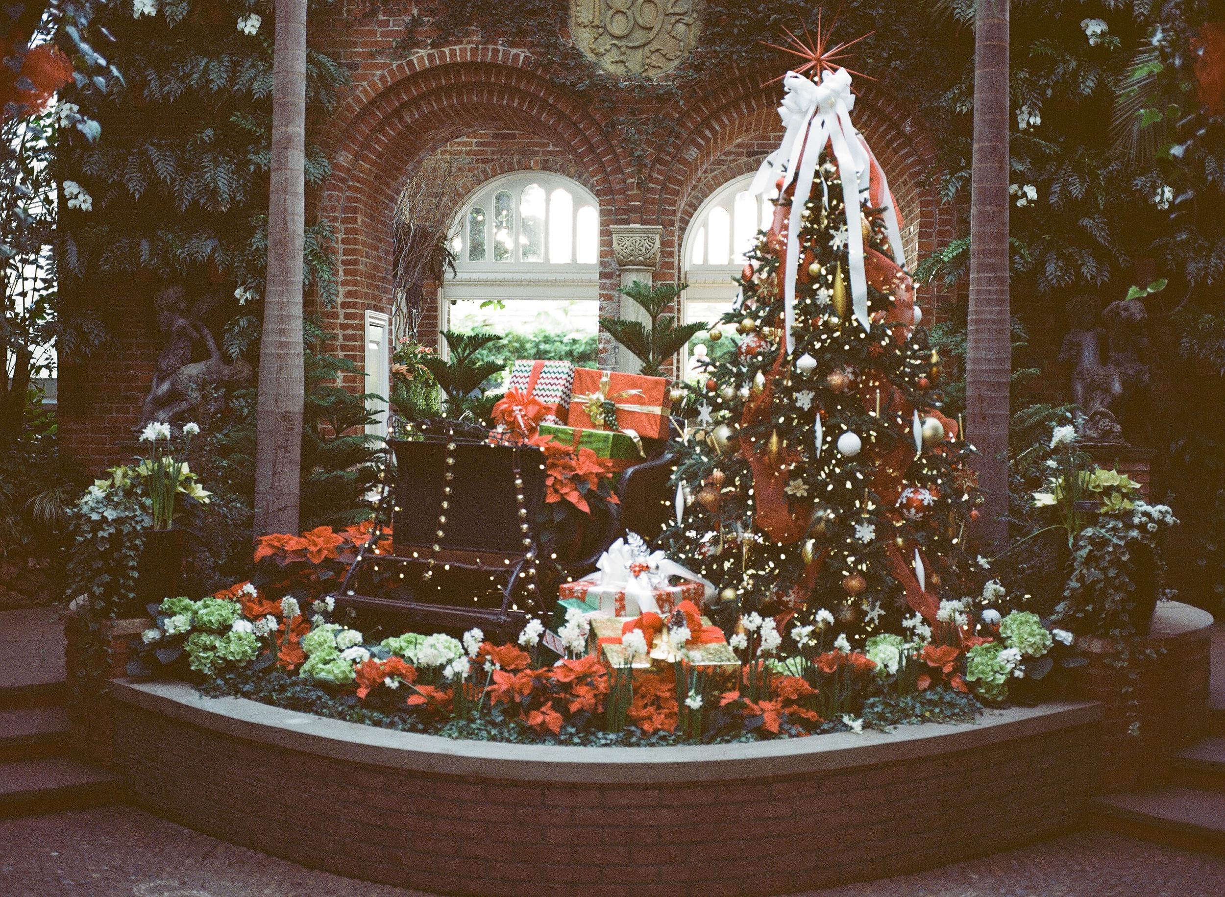 Phipps Conservatory Pittsburgh Winter Flower Show 029.jpg