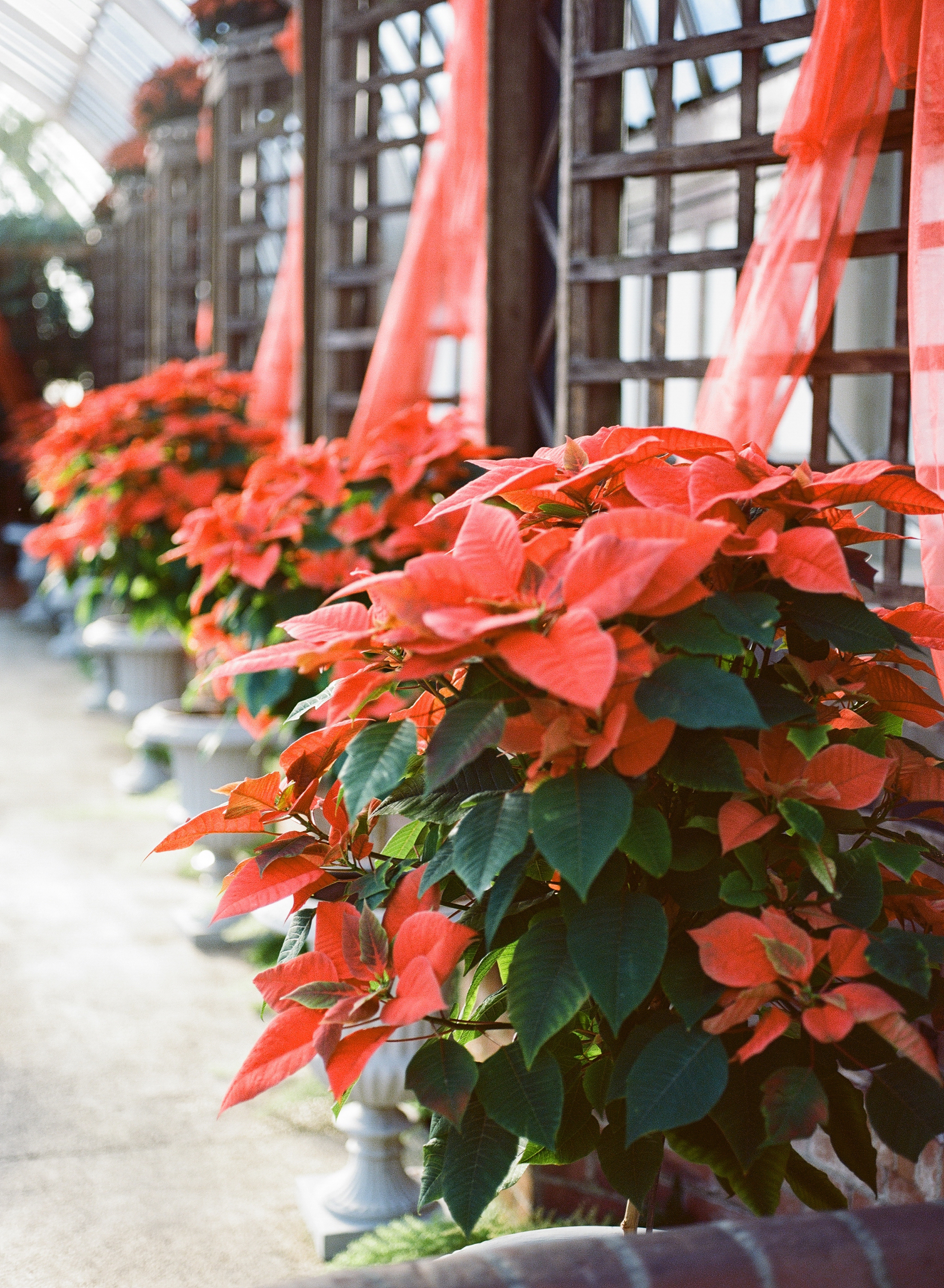 Phipps Conservatory Pittsburgh Winter Flower Show 034.jpg