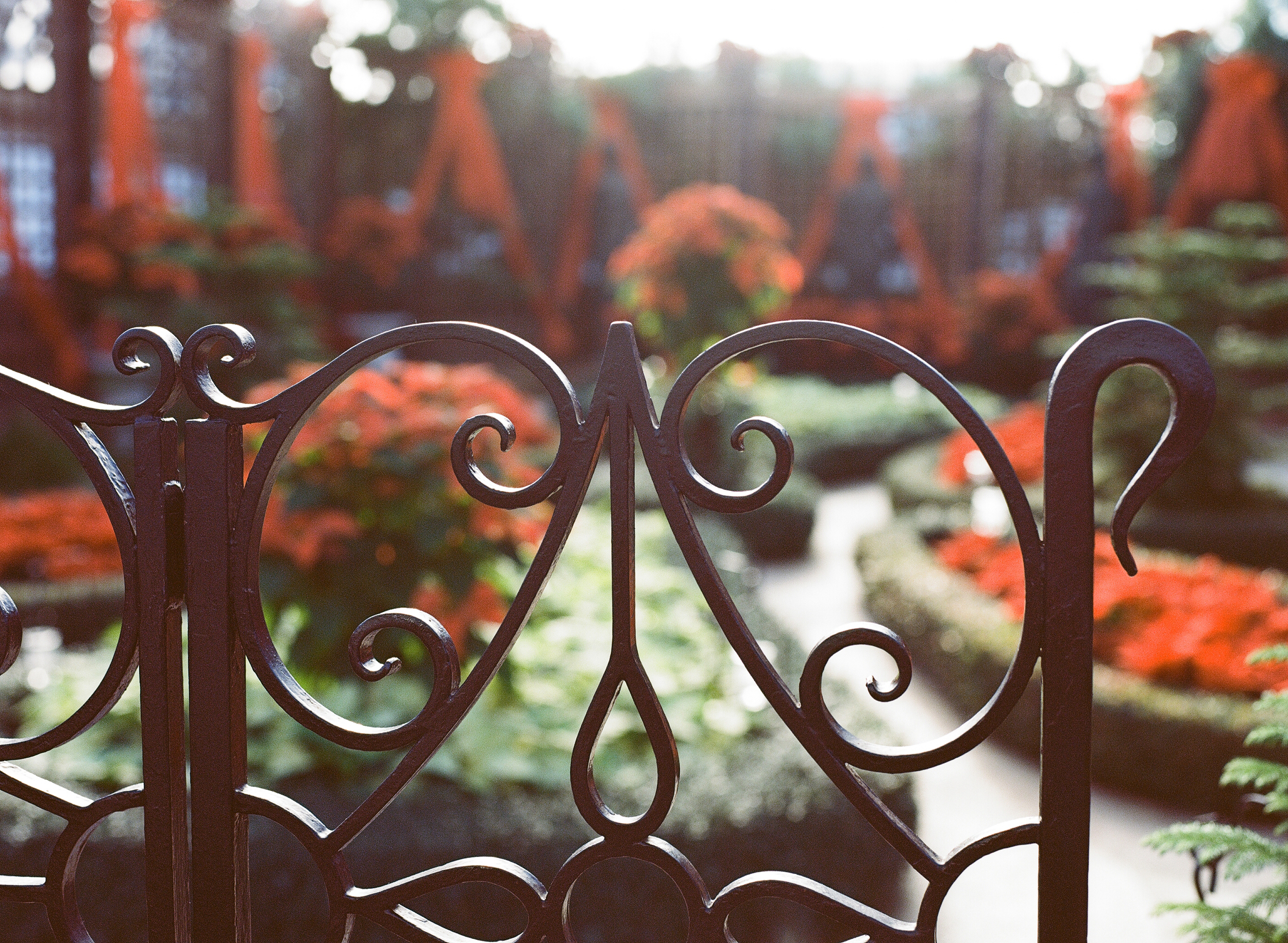 Phipps Conservatory Pittsburgh Winter Flower Show 035.jpg