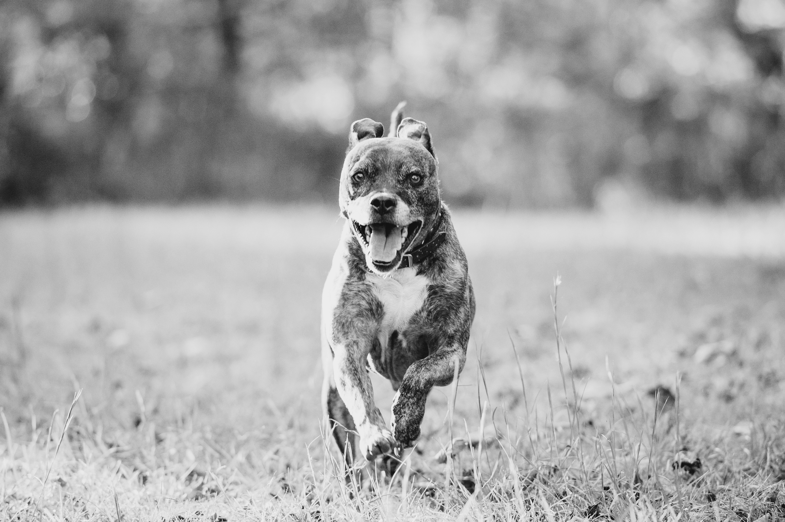 Running Dog Photography Pittsburgh