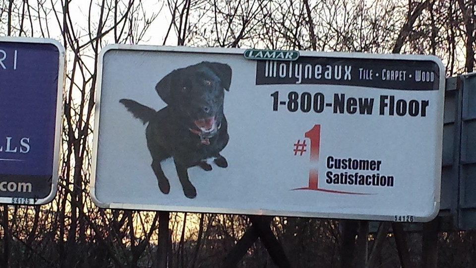 There she is! Molyneaux's pet photo contest winner, April, spotted somewhere in Pittsburgh, PA. It never gets old to see my work on a billboard.