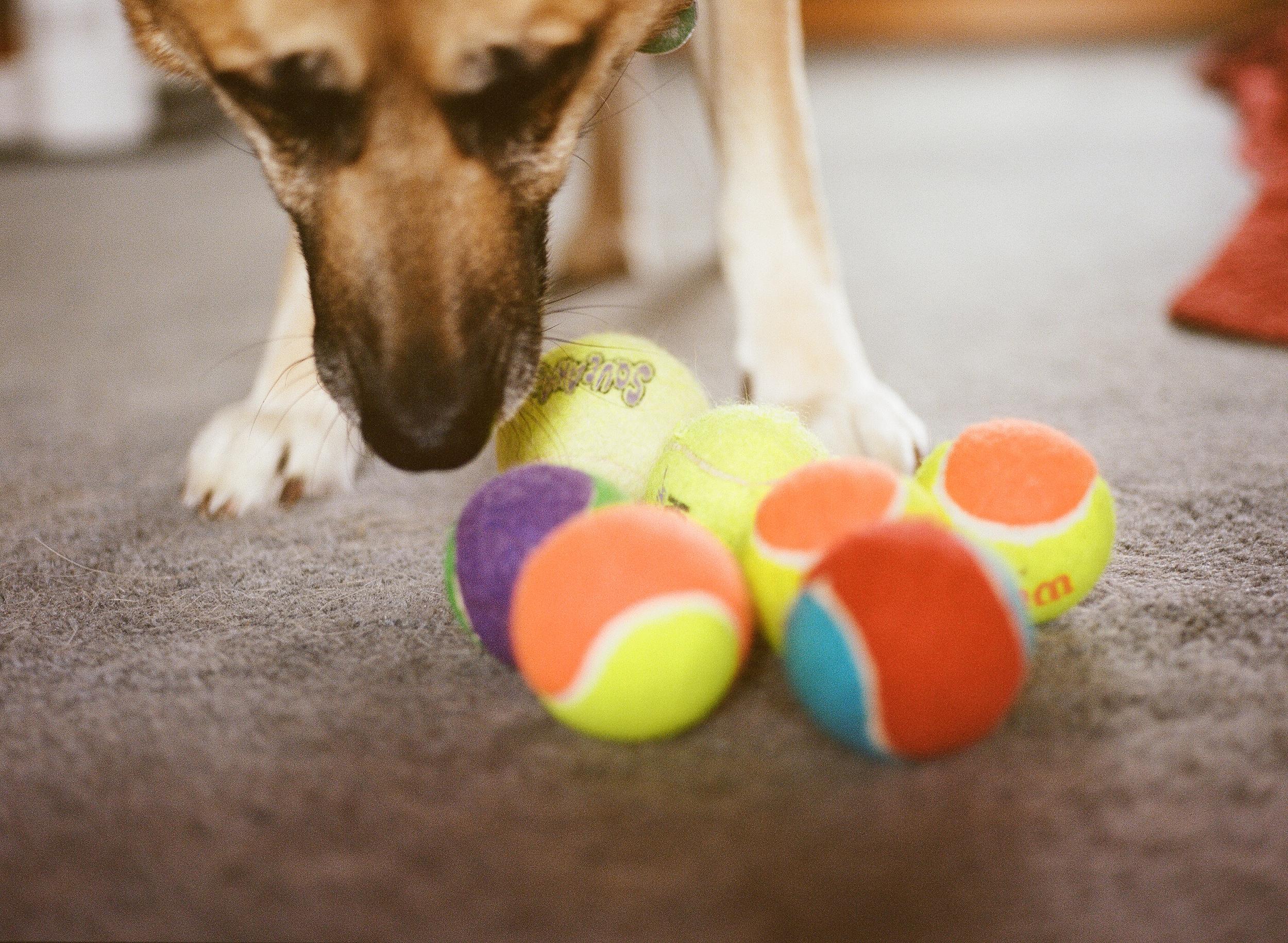 Dog Photographer Jenny Karlsson 002.jpg