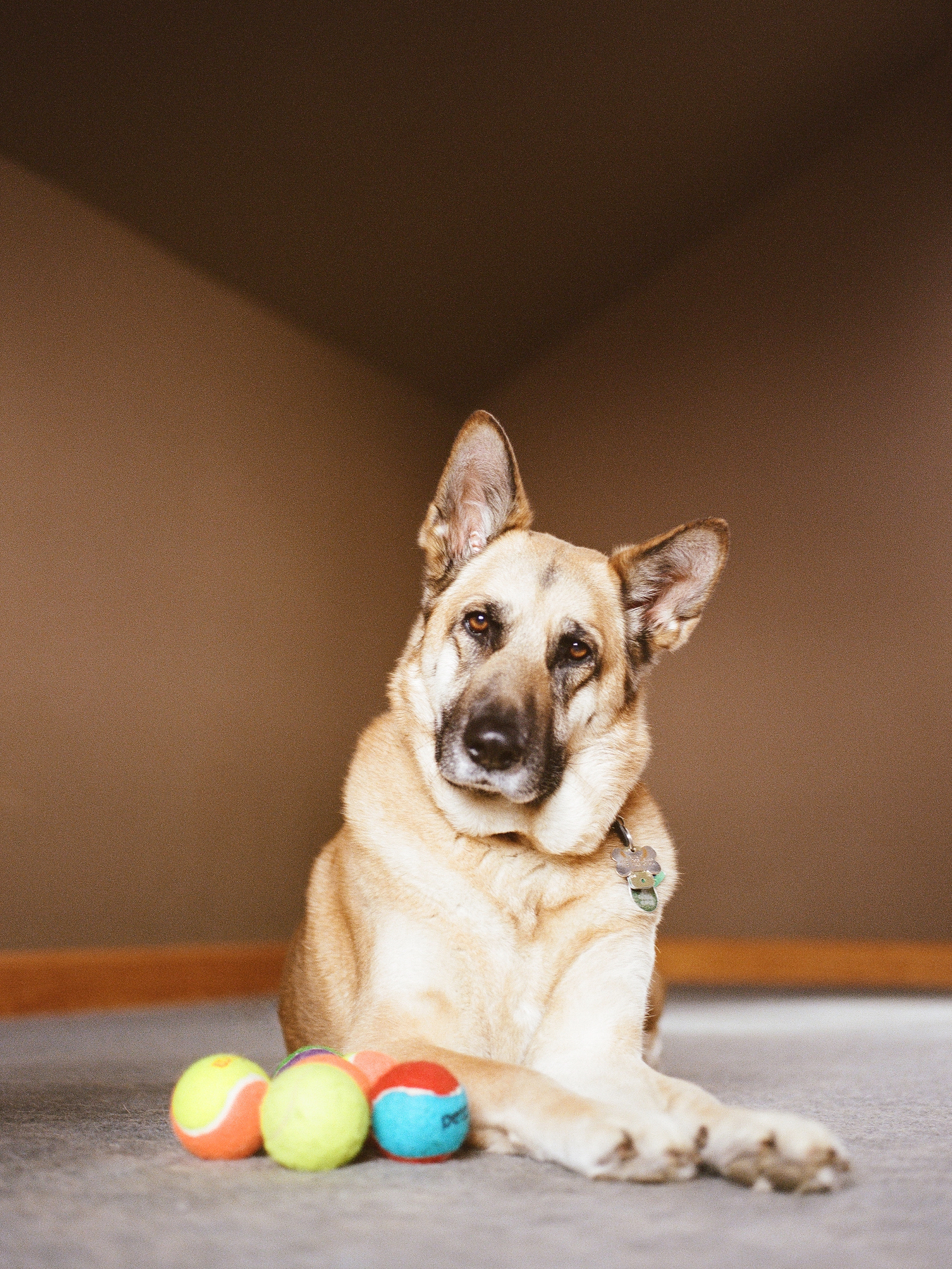 Dog Photographer Jenny Karlsson 011.jpg