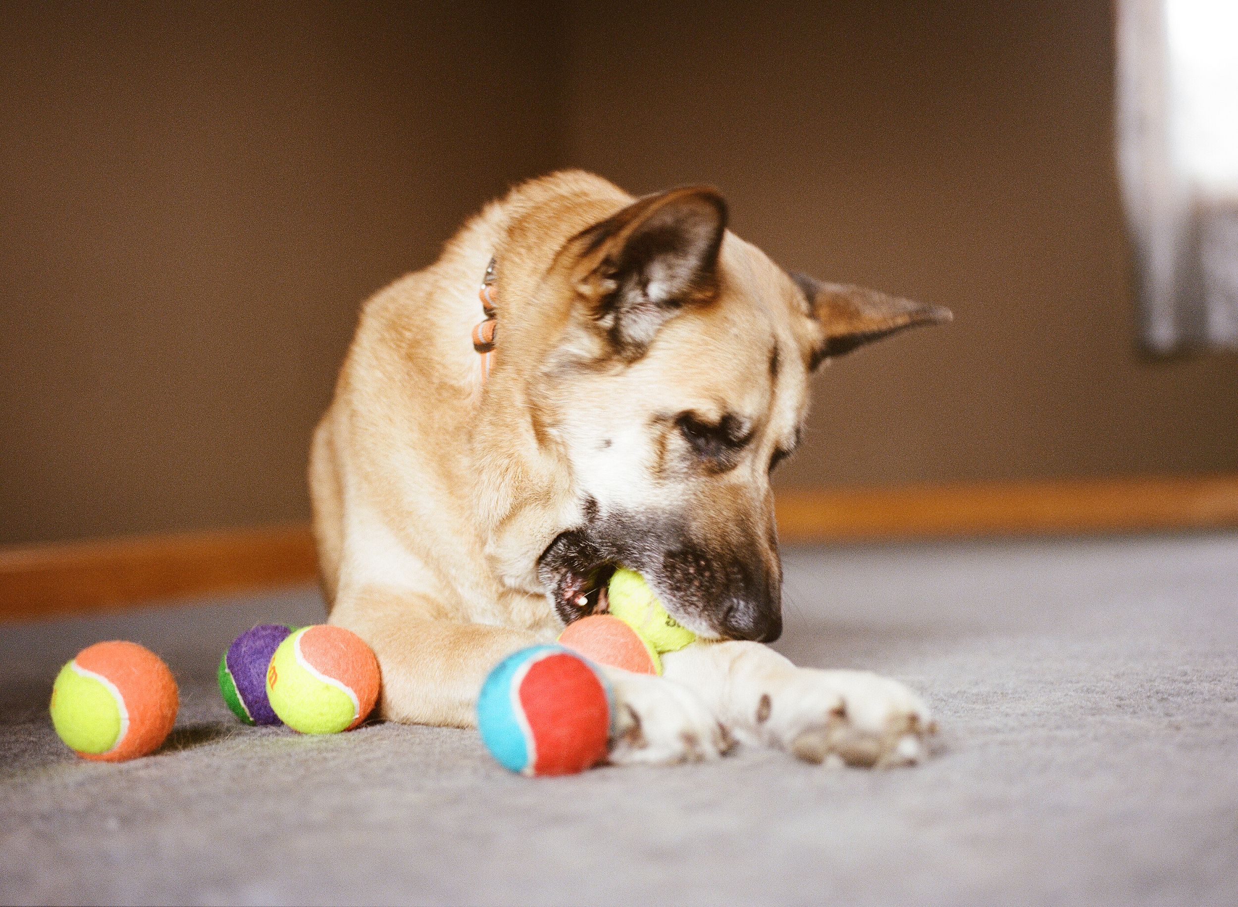 Dog Photographer Jenny Karlsson 013.jpg