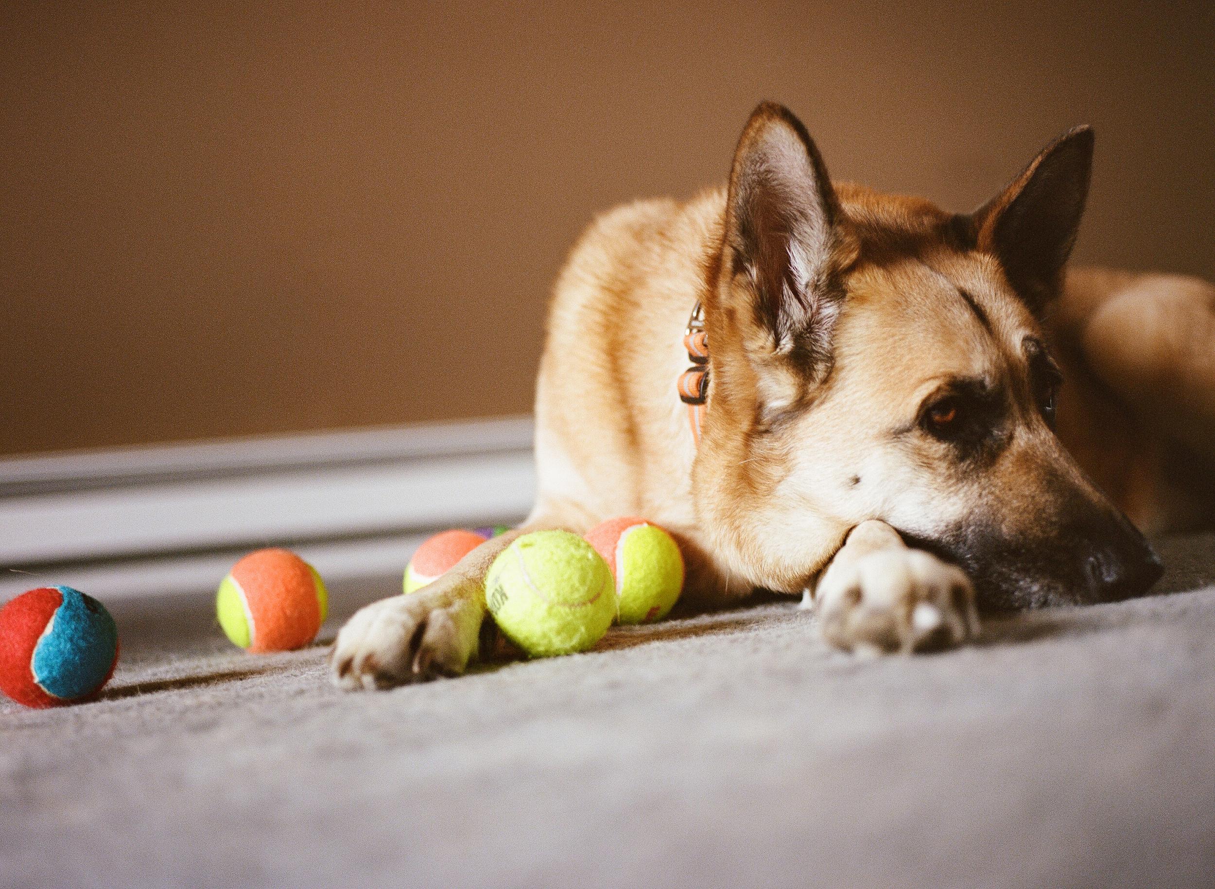 Dog Photographer Jenny Karlsson 015.jpg