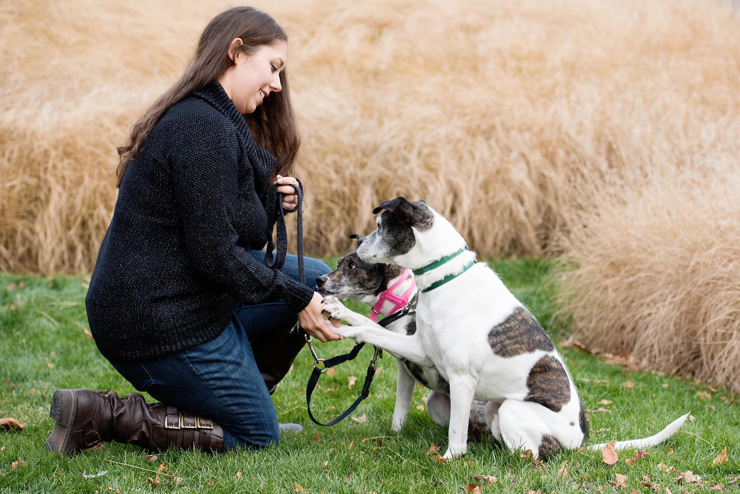 Remus Stella Dog Photography Pittsburgh 002.jpg