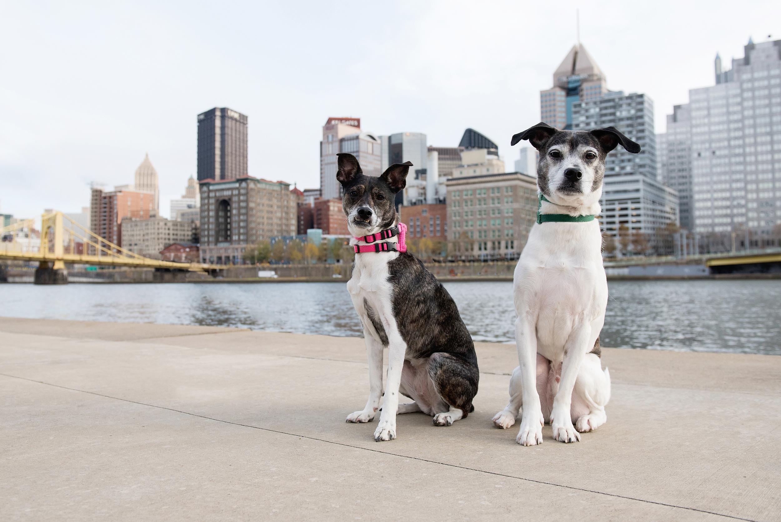Remus Stella Dog Photography Pittsburgh 004.jpg