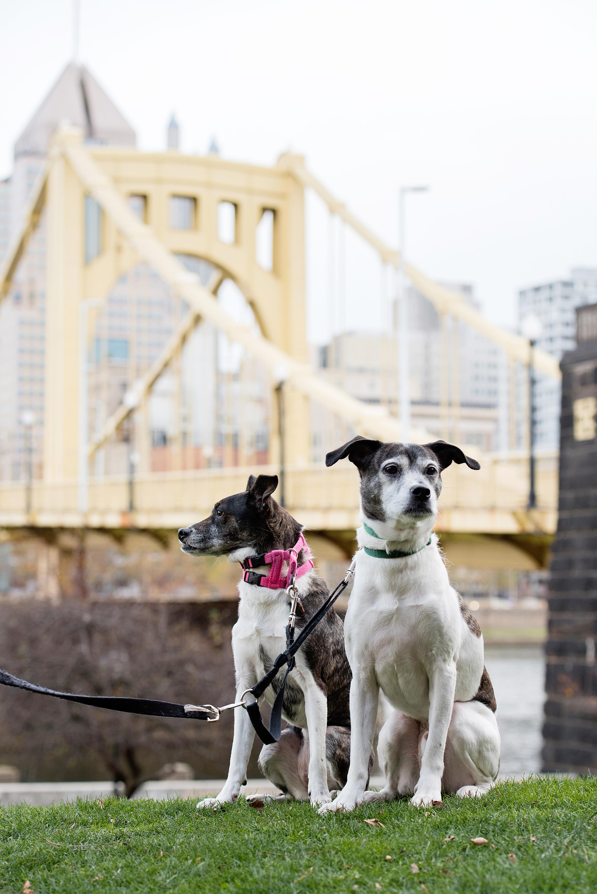 Remus Stella Dog Photography Pittsburgh 010.jpg
