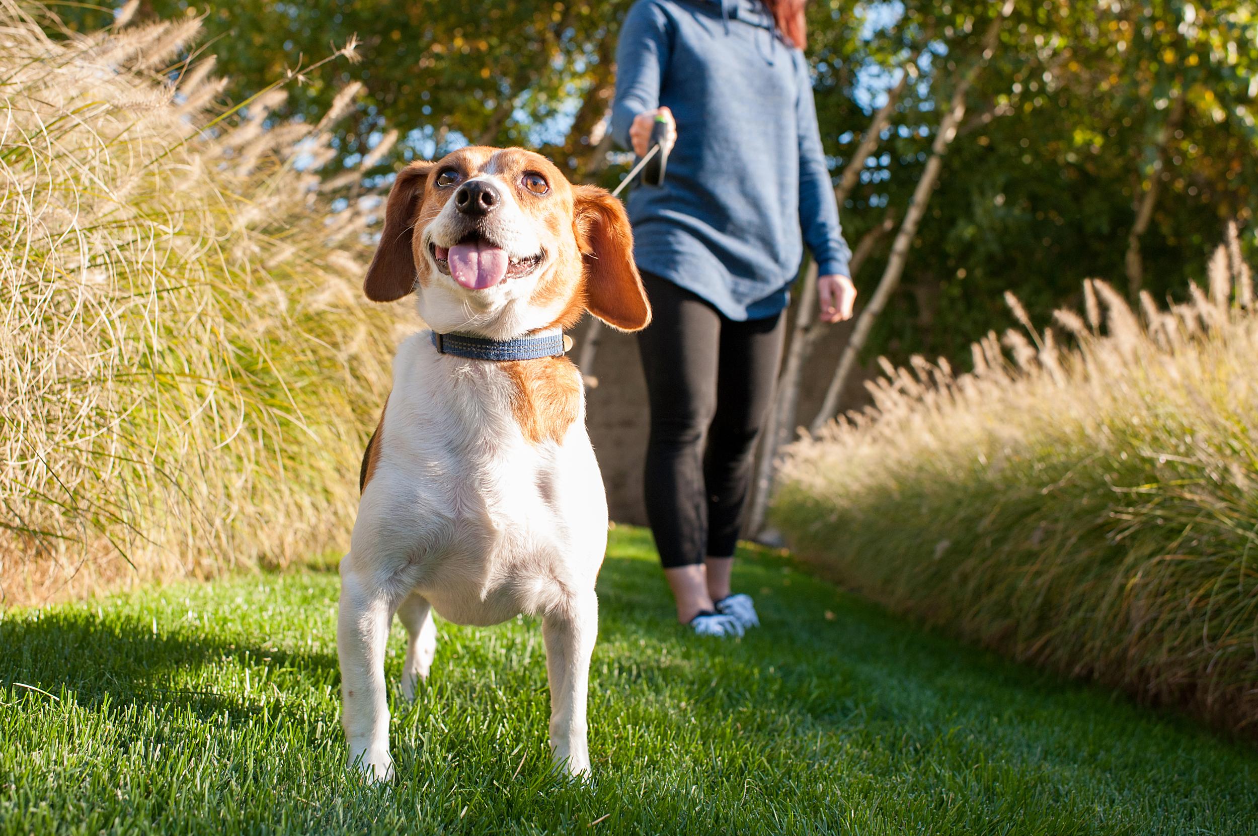 dexter jack-a-bee dog photography pittsburgh 009.jpg