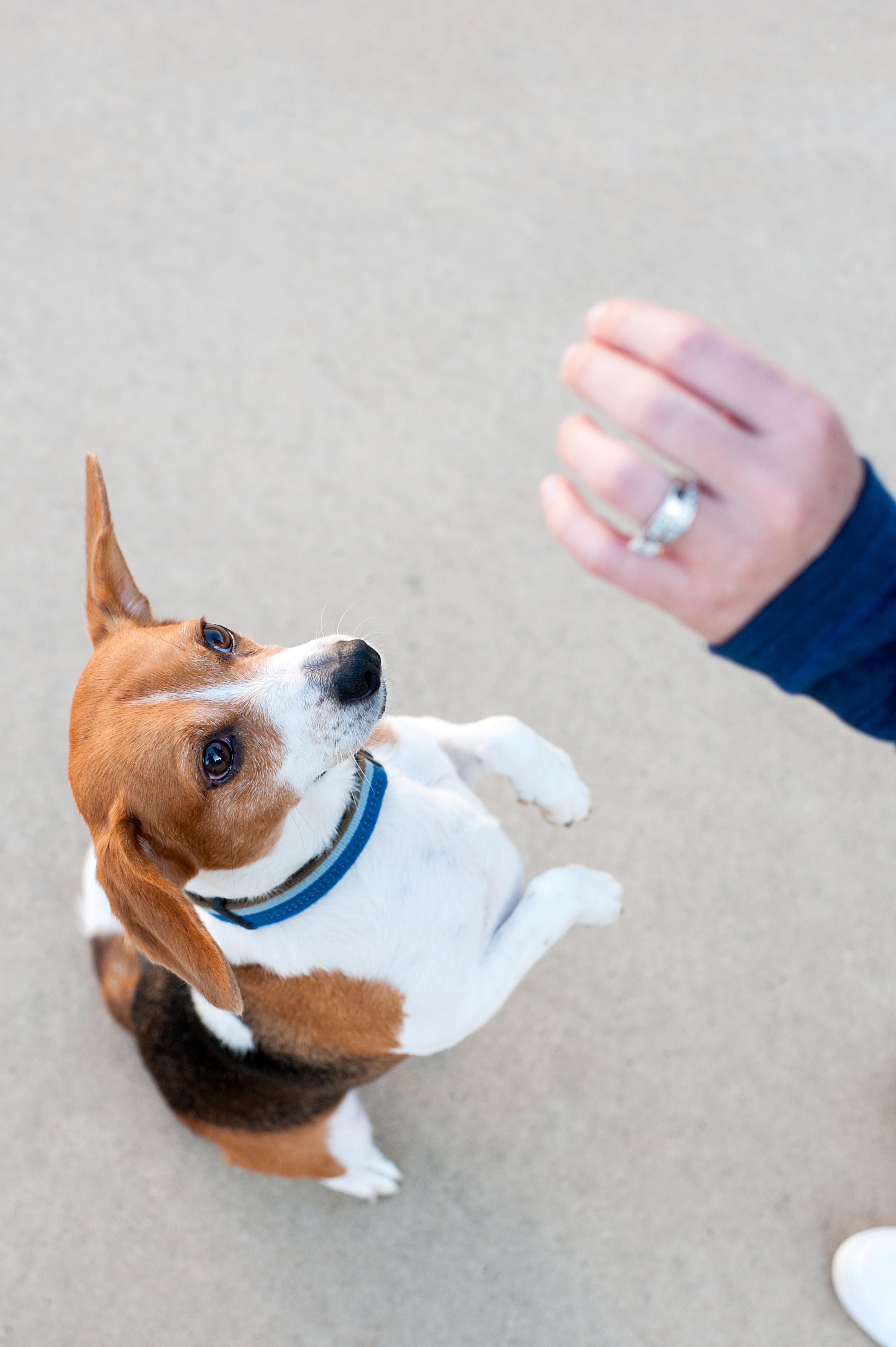dexter jack-a-bee dog photography pittsburgh 011.jpg