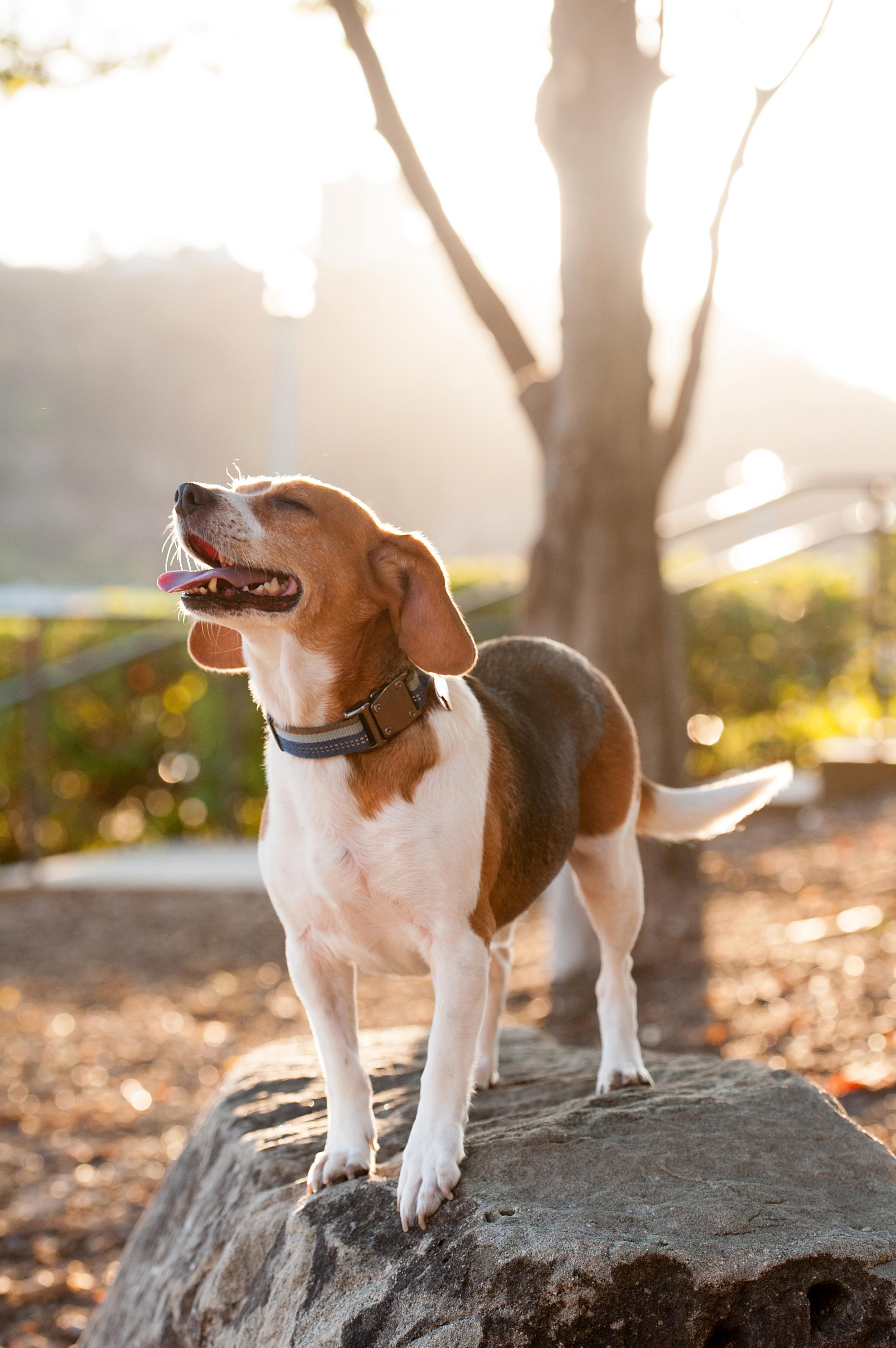 dexter jack-a-bee dog photography pittsburgh 017.jpg