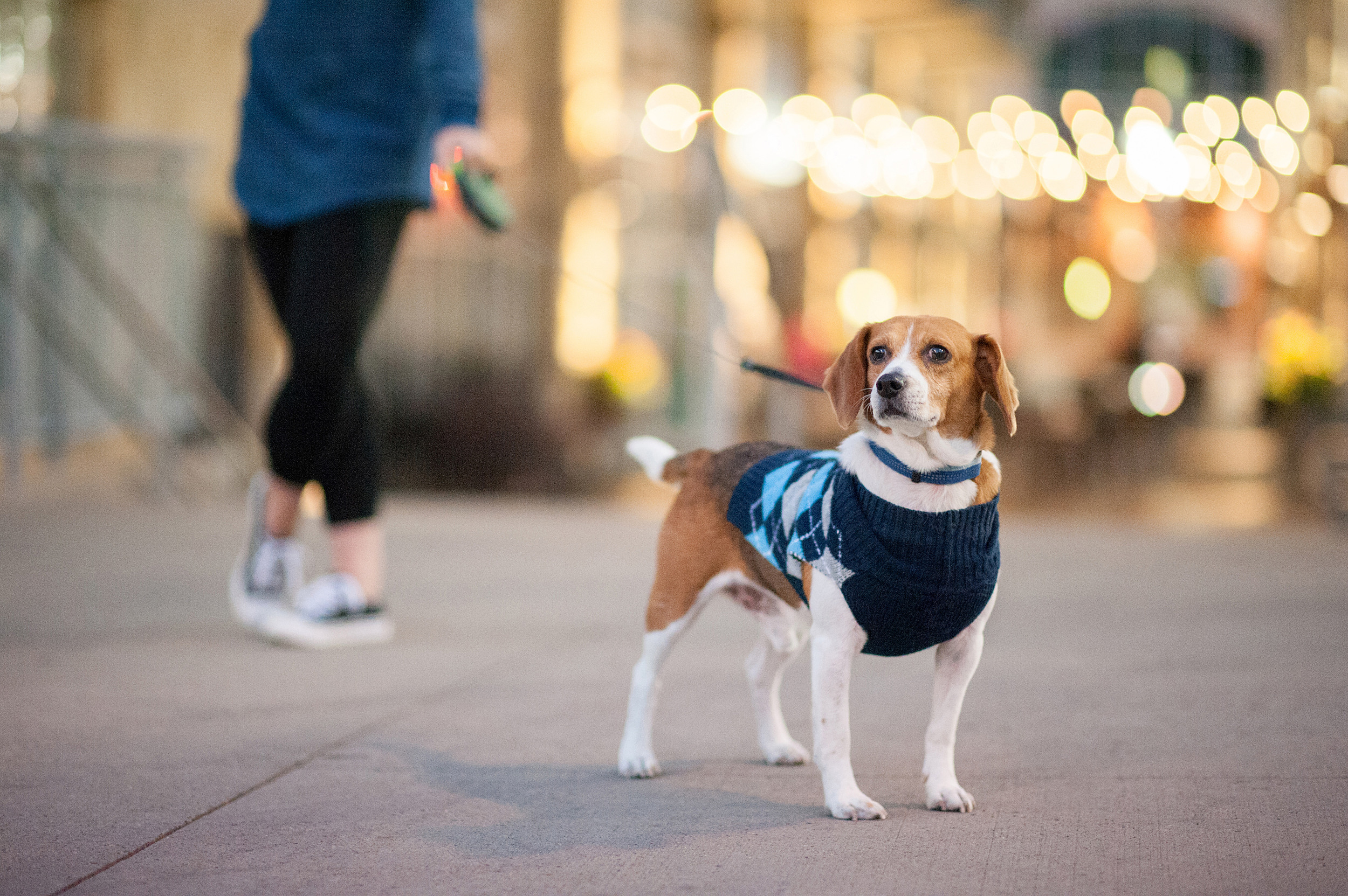 dexter jack-a-bee dog photography pittsburgh 031.jpg