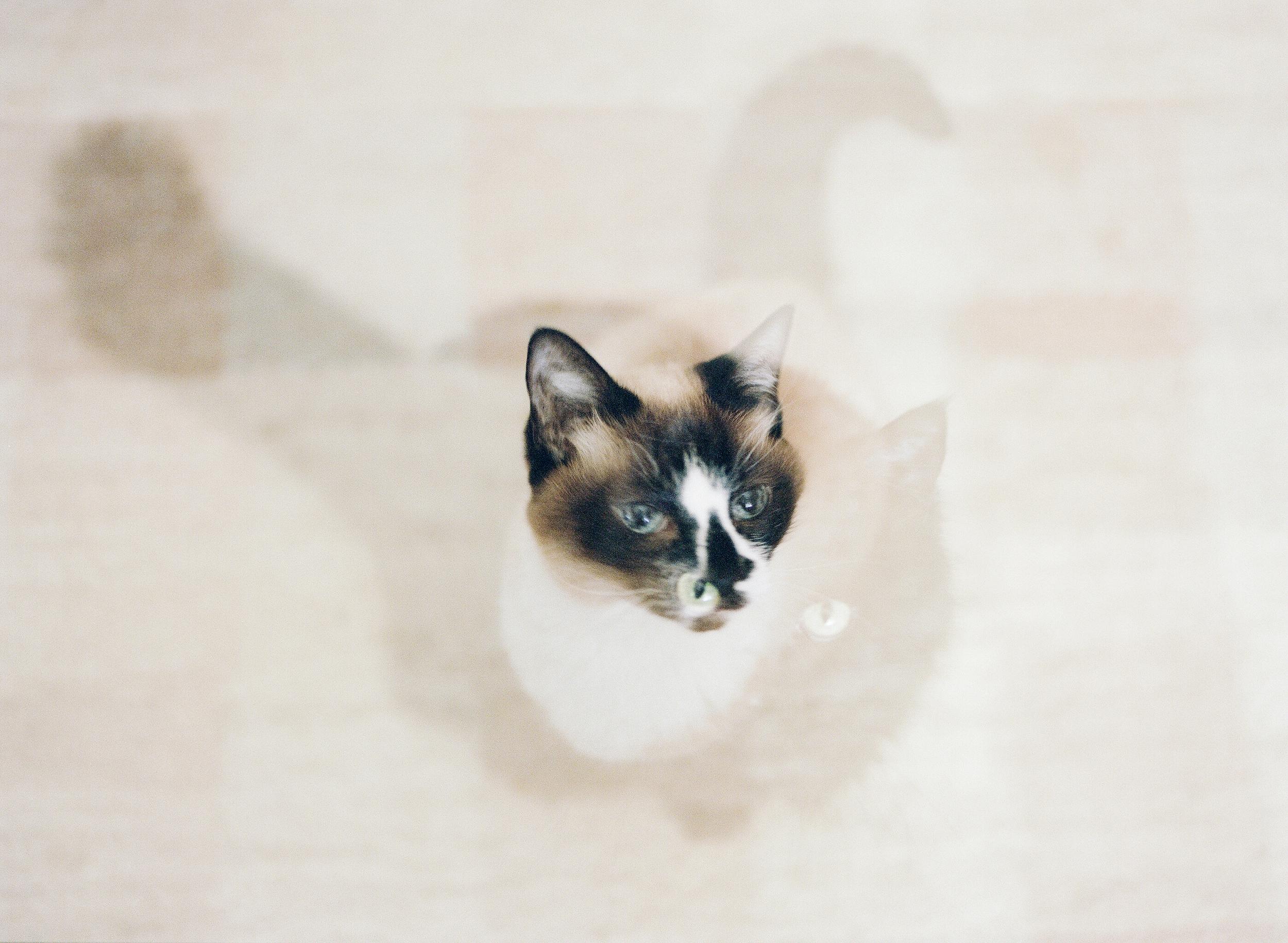 Cat Photography Pittsburgh Porter Tchin 009.jpg
