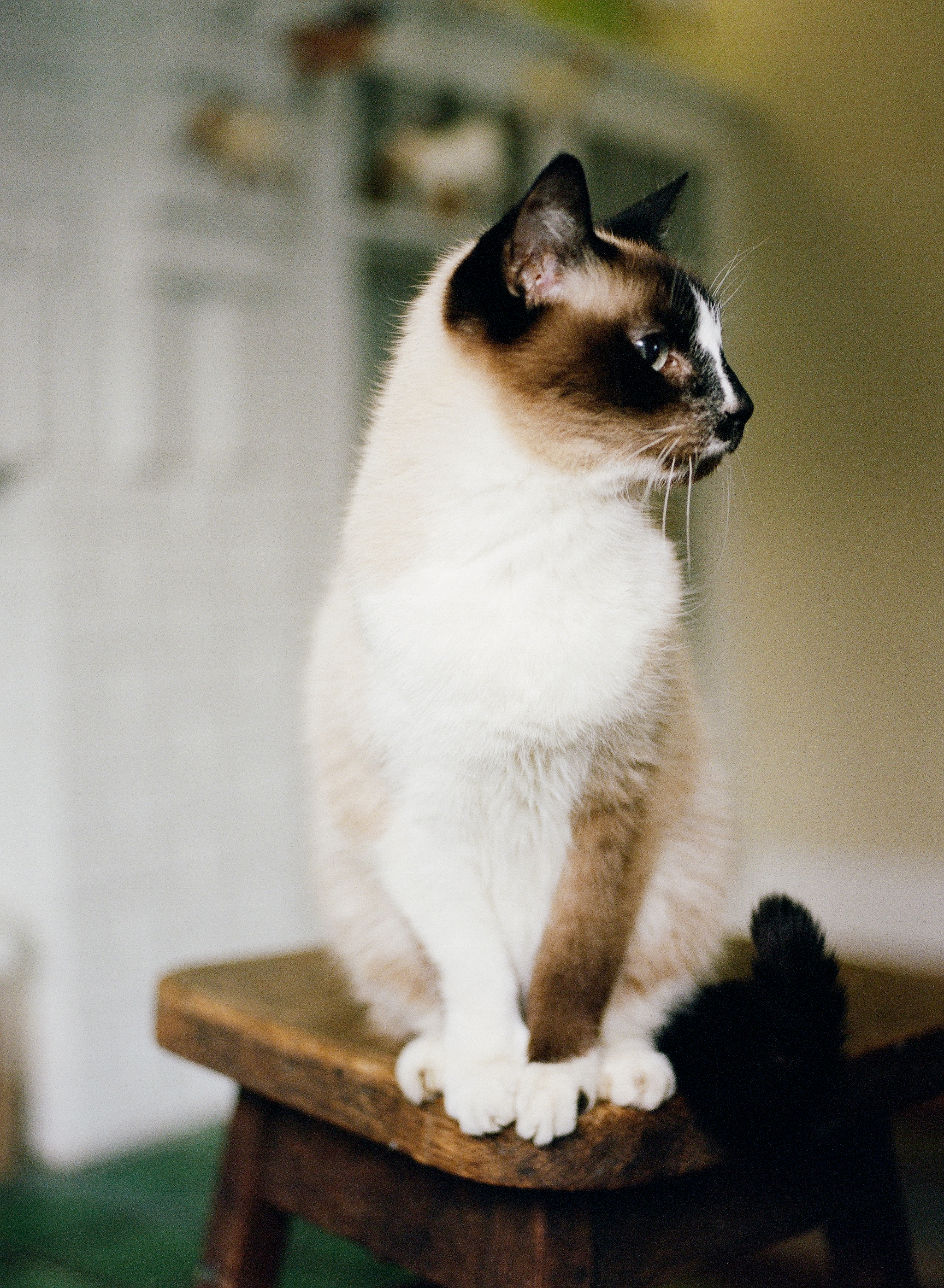 Cat Photography Pittsburgh Porter Tchin 010.jpg