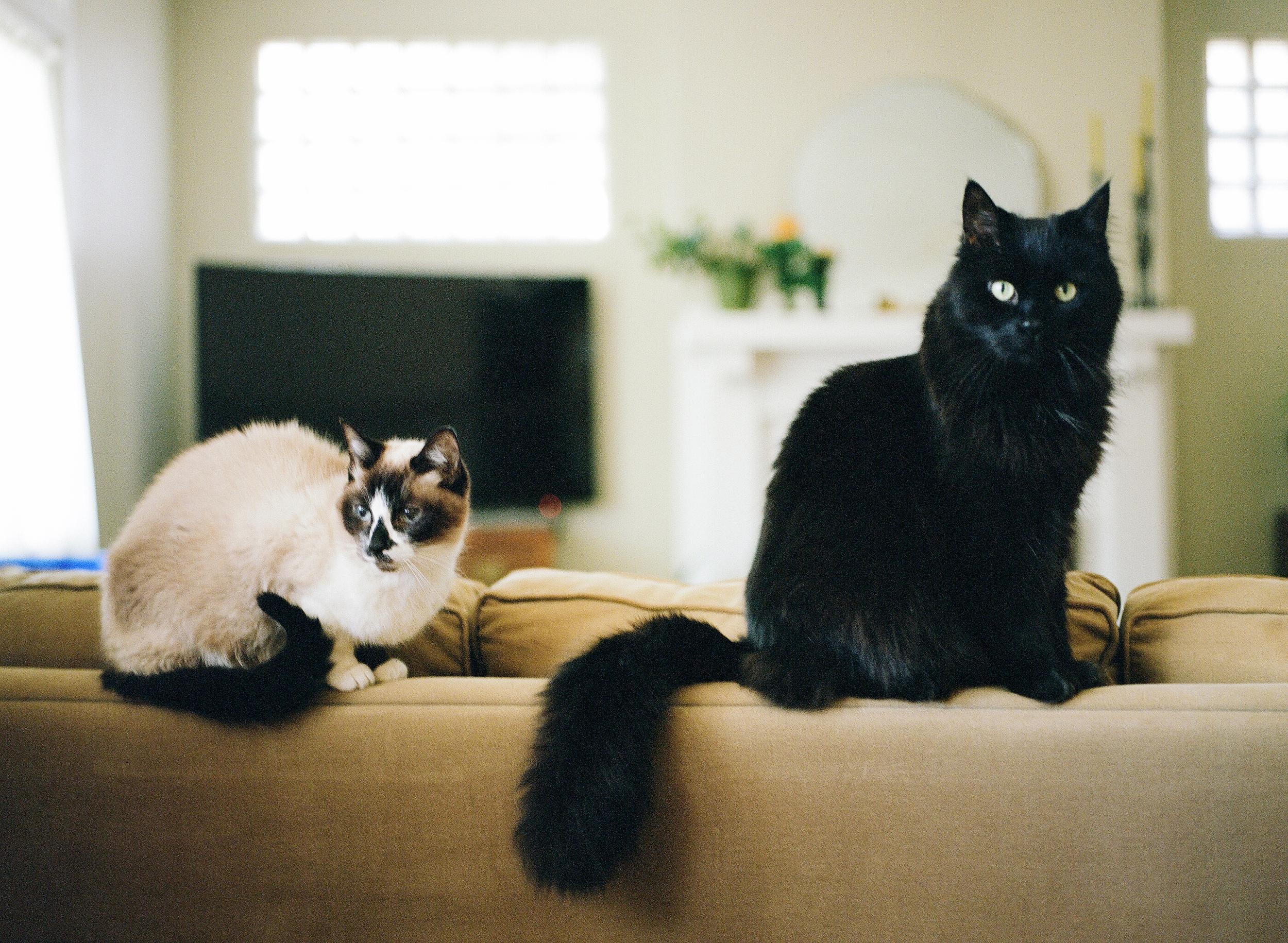 Cat Photography Pittsburgh Porter Tchin 015.jpg