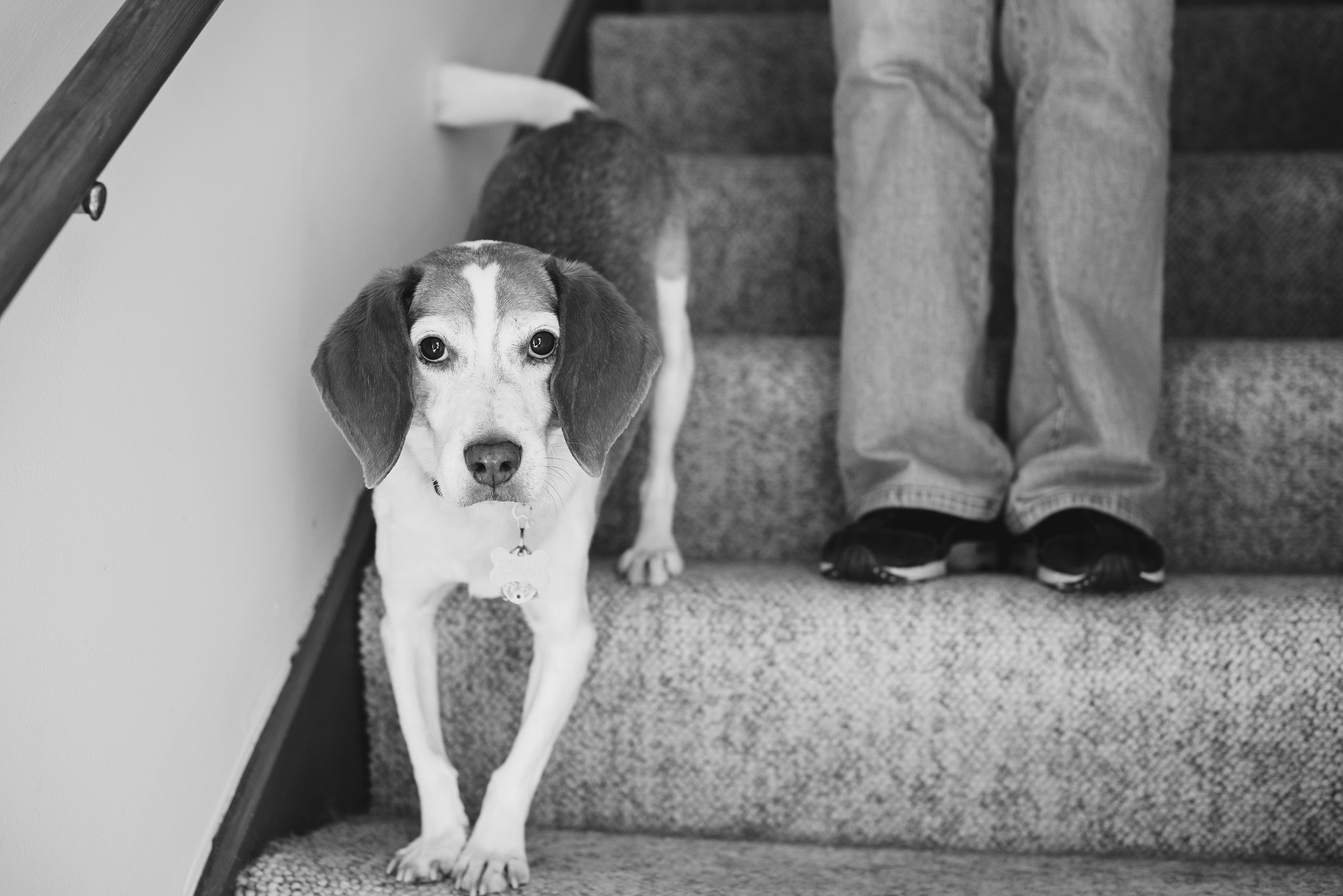 Pet Photography Pittsburgh Roman Milo 001.jpg