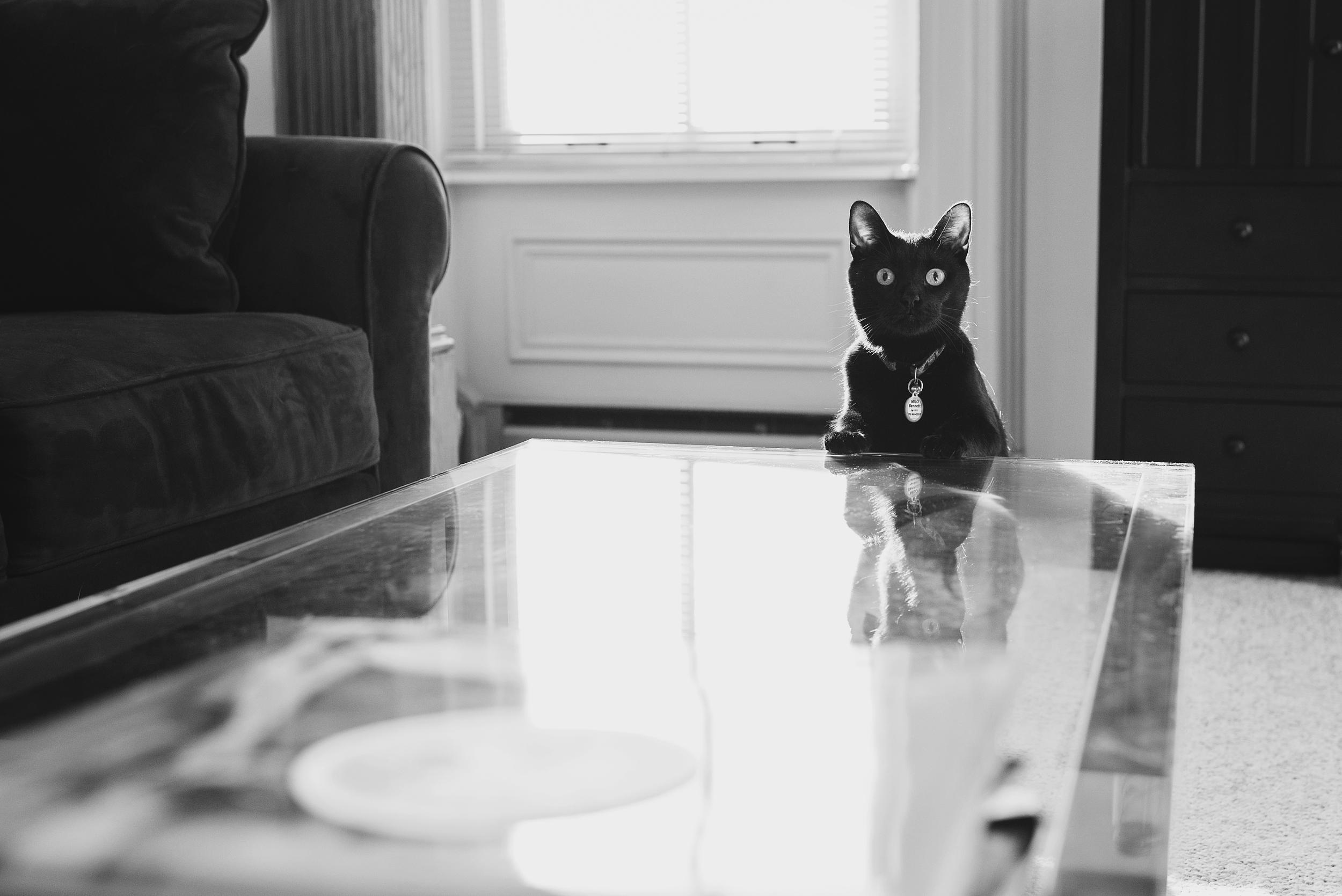 Pet Photography Pittsburgh Roman Milo 004.jpg