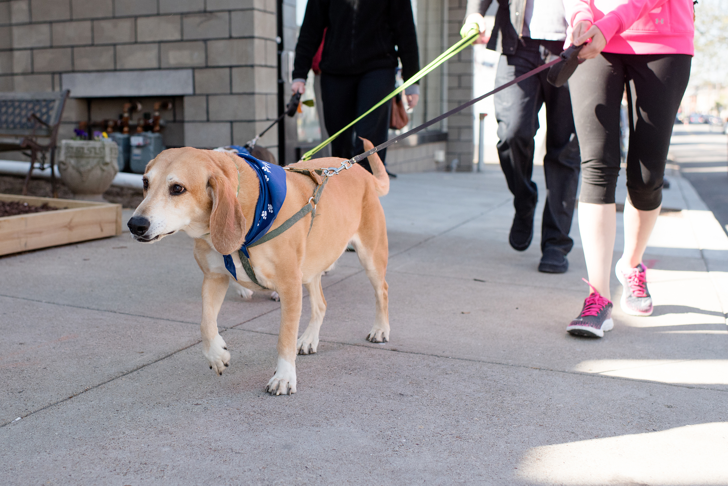 Bark Shadyside Pup Walk Pittsburgh 2016 067.jpg
