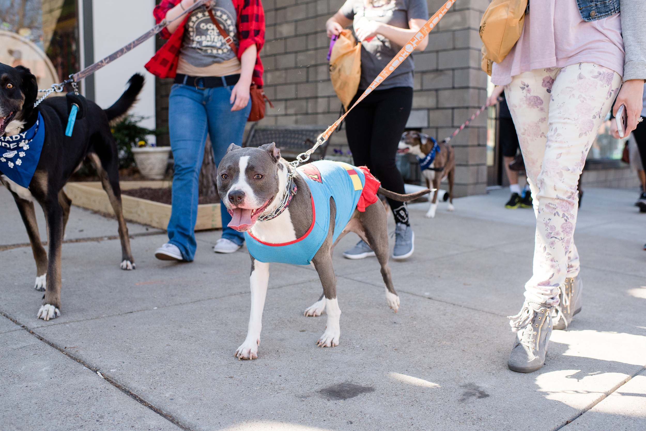 Bark Shadyside Pup Walk Pittsburgh 2016 070.jpg