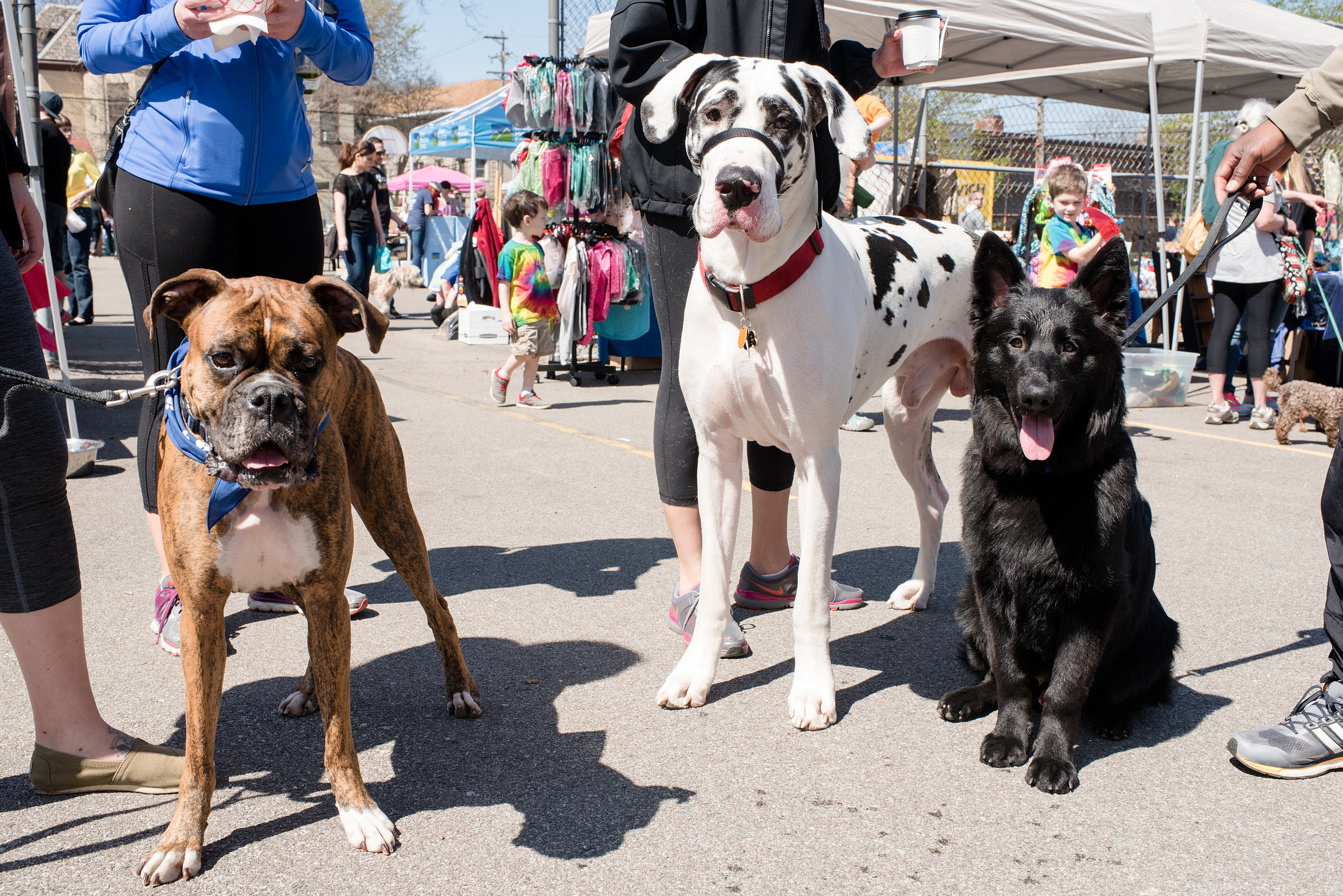 Bark Shadyside Pup Walk Pittsburgh 2016 173.jpg